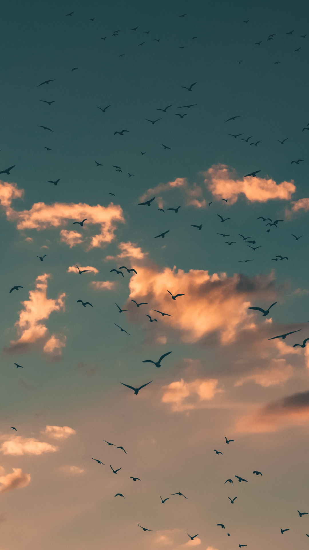 iPhone Wallpaper Sky Birds Sky