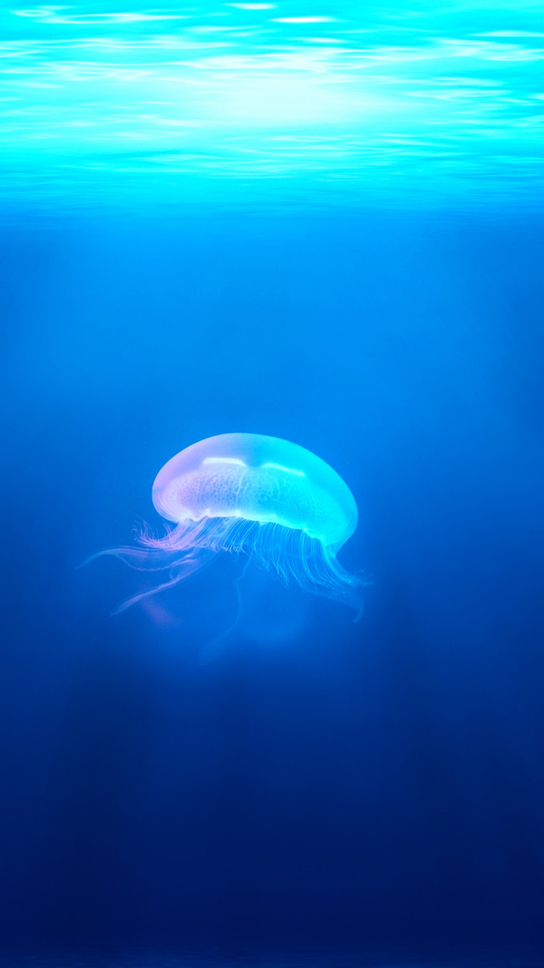 iPhone Wallpaper Jellyfish Water Ocean 3Wallpapers : notre sélection de fonds d'écran du 01/02/2018