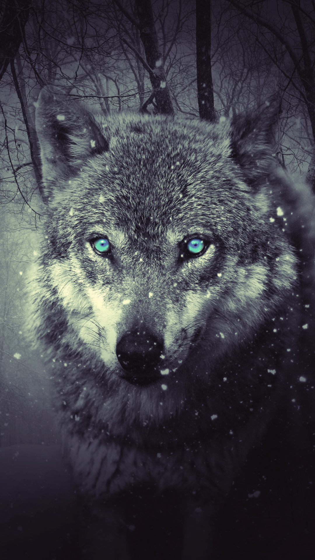 iPhone wallpaper forest wolf Wolf