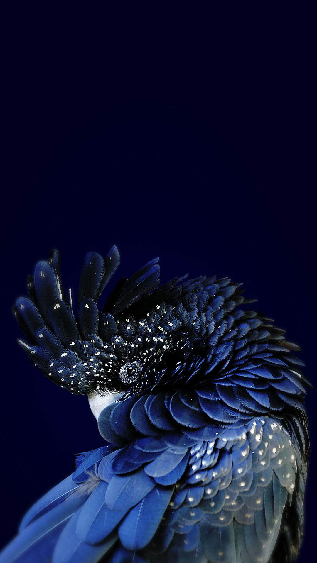 iPhone wallpaper parrot blue 3Wallpapers : notre sélection de fonds d'écran du 01/03/2018