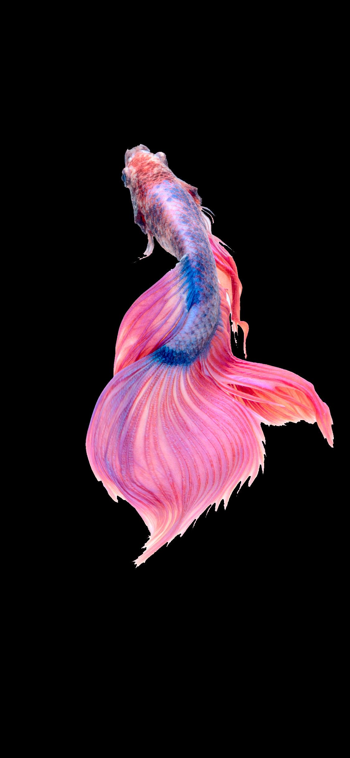 iPhone wallpaper fish pink Fonds d'écran iPhone du 29/05/2018