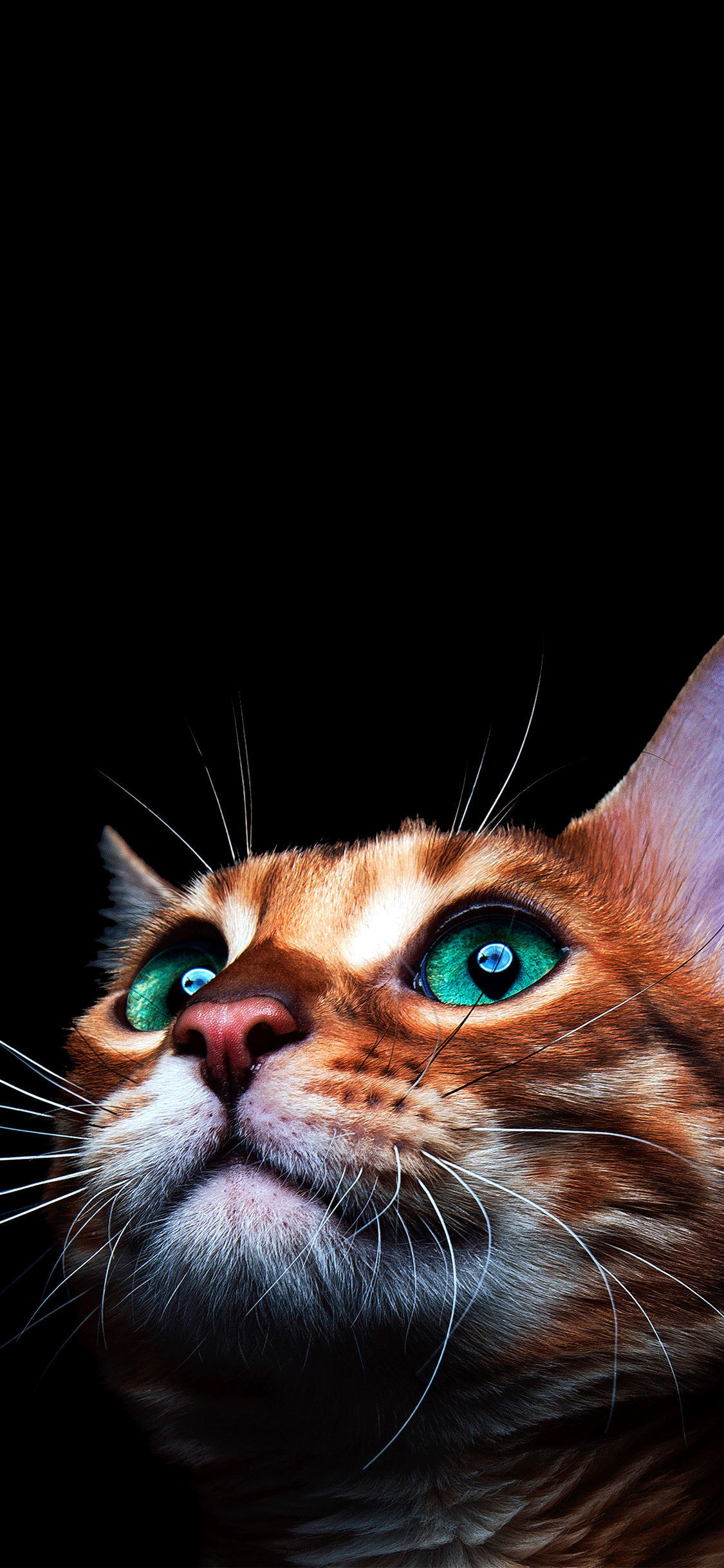 iPhone wallpaper cat green eyes Fonds d'écran iPhone du 09/07/2018