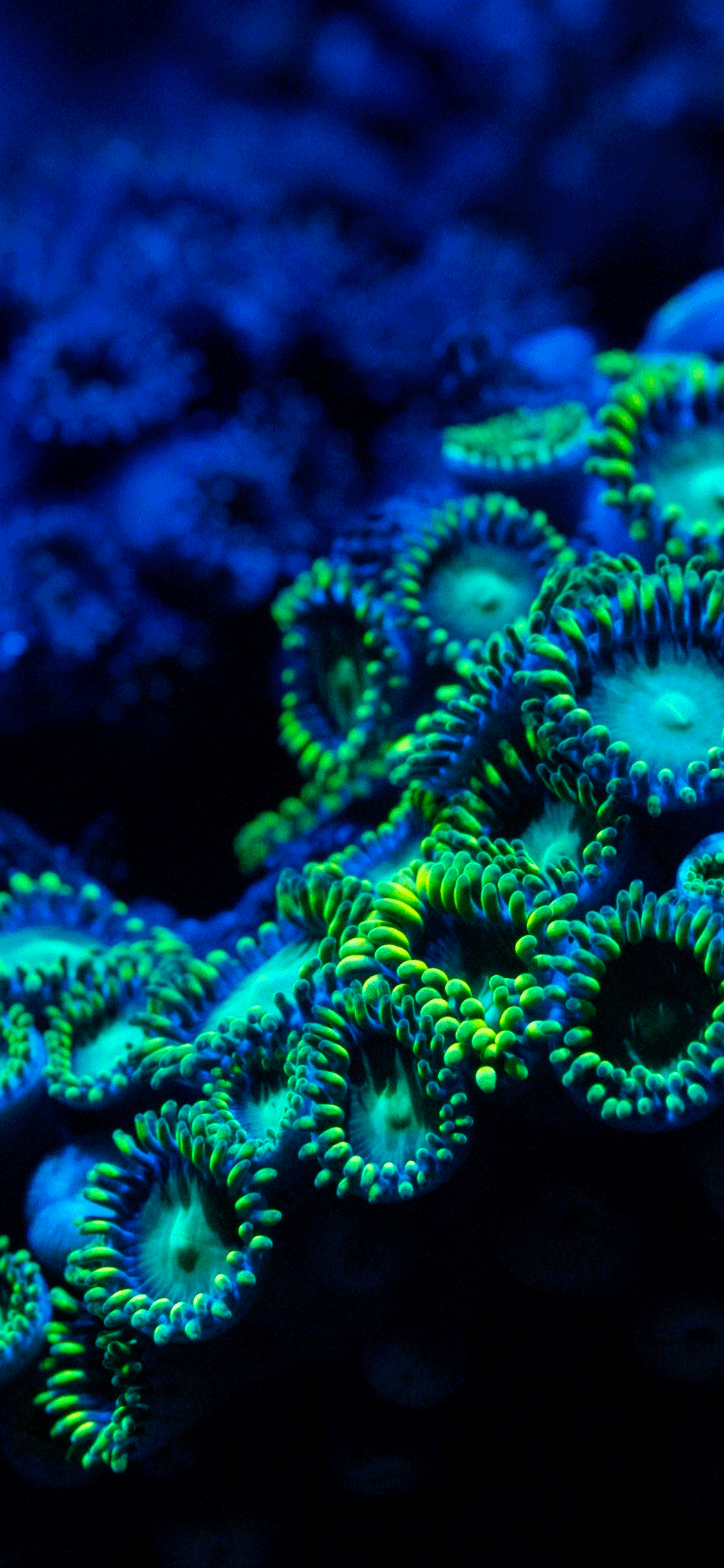 iPhone wallpaper coral reef 1 Fonds d'écran iPhone du 03/07/2018