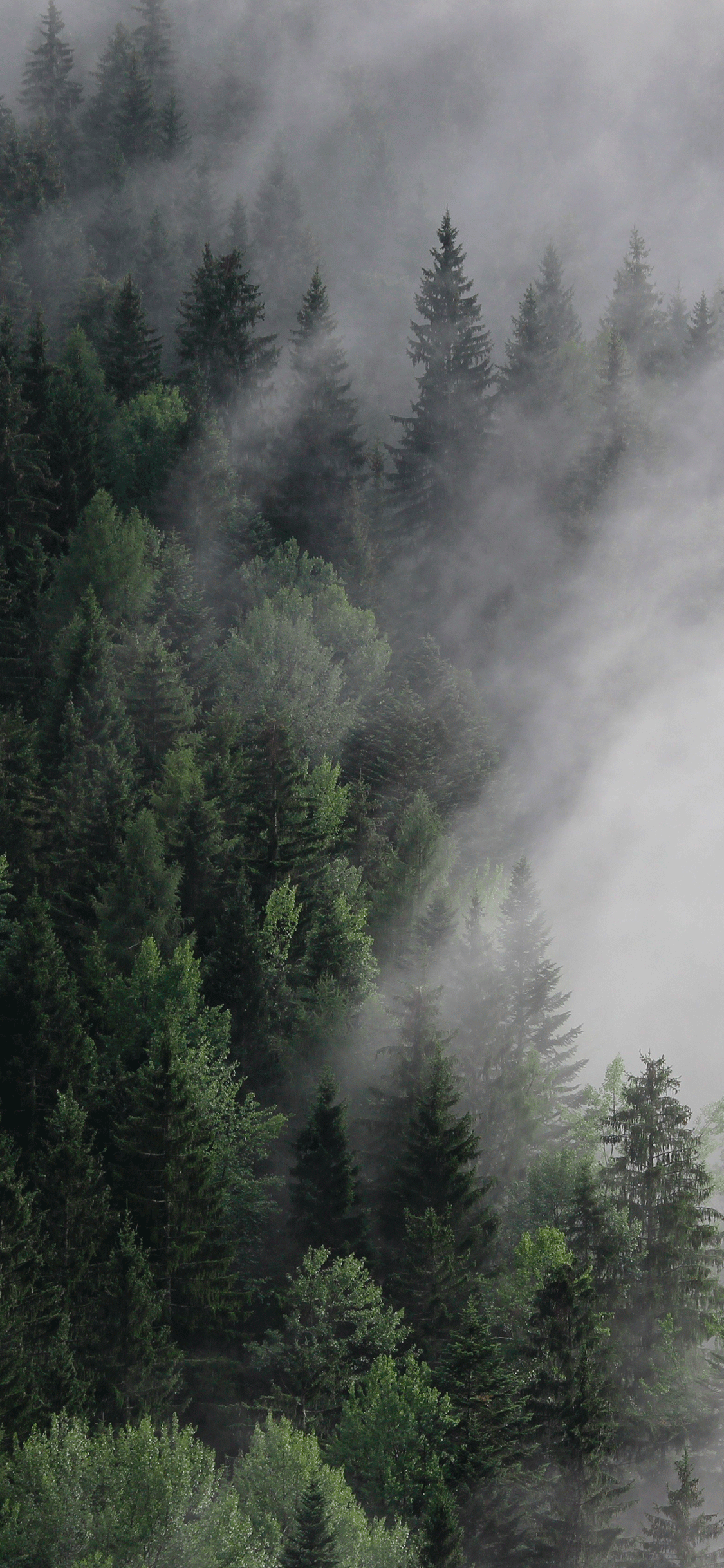 iPhone wallpaper forest fog Fonds d'écran iPhone du 10/07/2018
