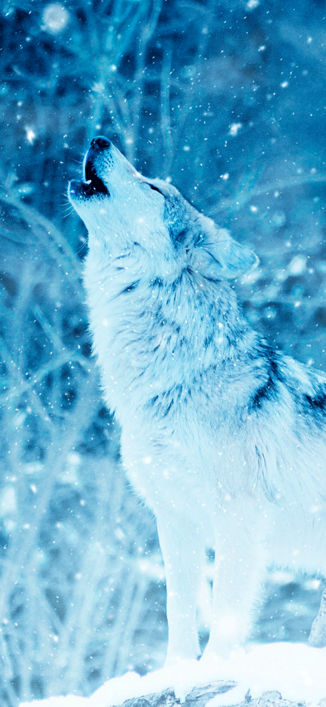 iPhone wallpaper wolf snow Wolf