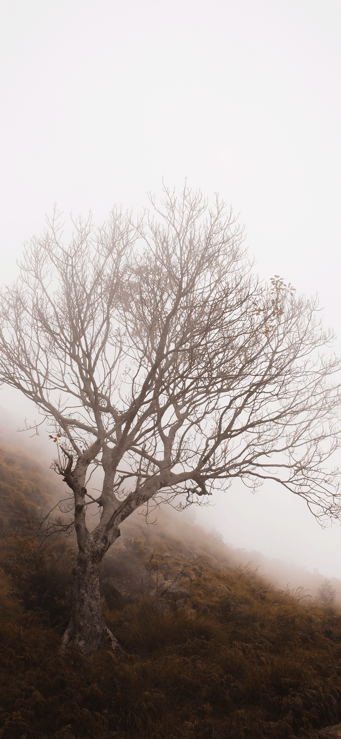 iPhone wallpaper fog tree india Fonds d'écran iPhone du 16/08/2018