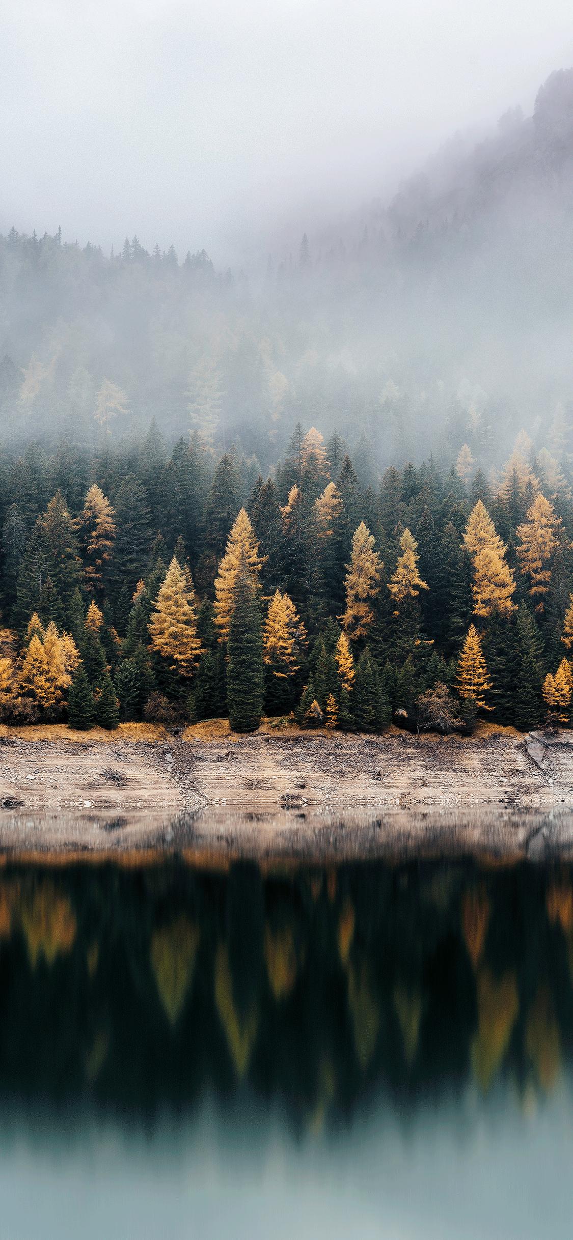 iPhone wallpaper forest fog Fonds d'écran iPhone du 14/08/2018