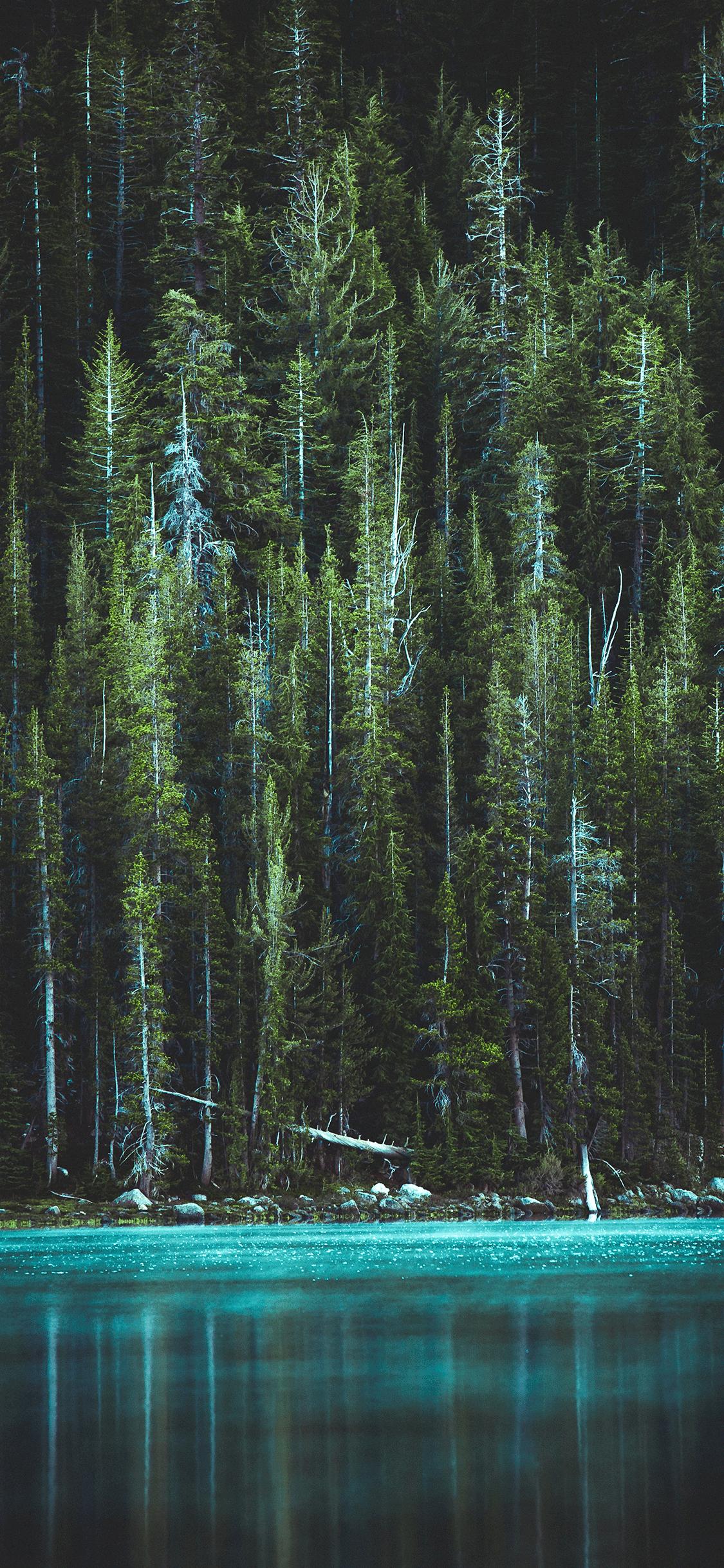 iPhone wallpaper forest river Fonds d'écran iPhone du 14/08/2018