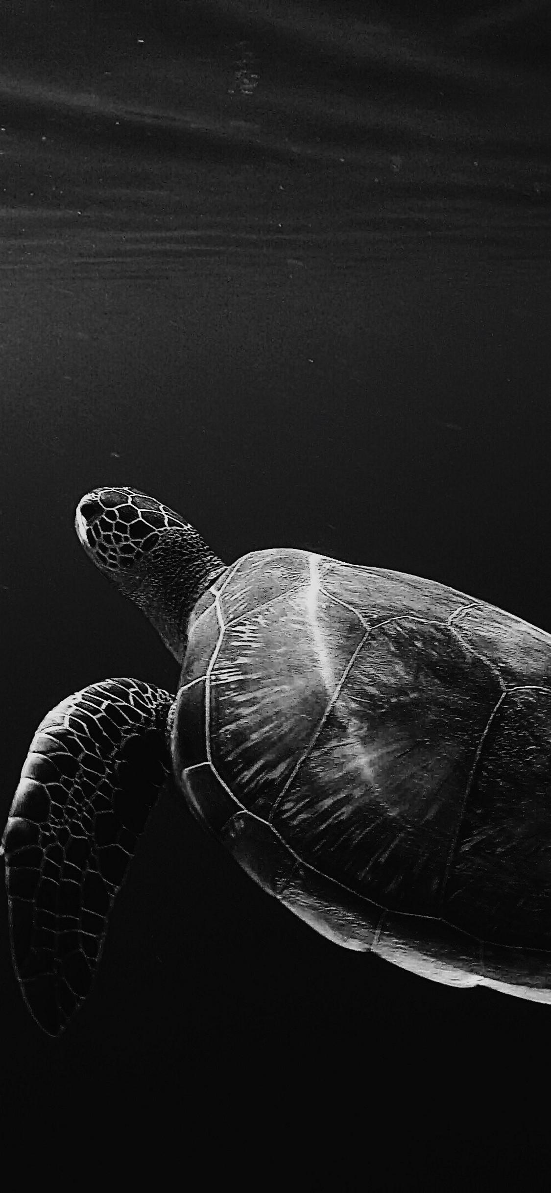 iPhone wallpaper sea turtle Fonds d'écran iPhone du 08/08/2018