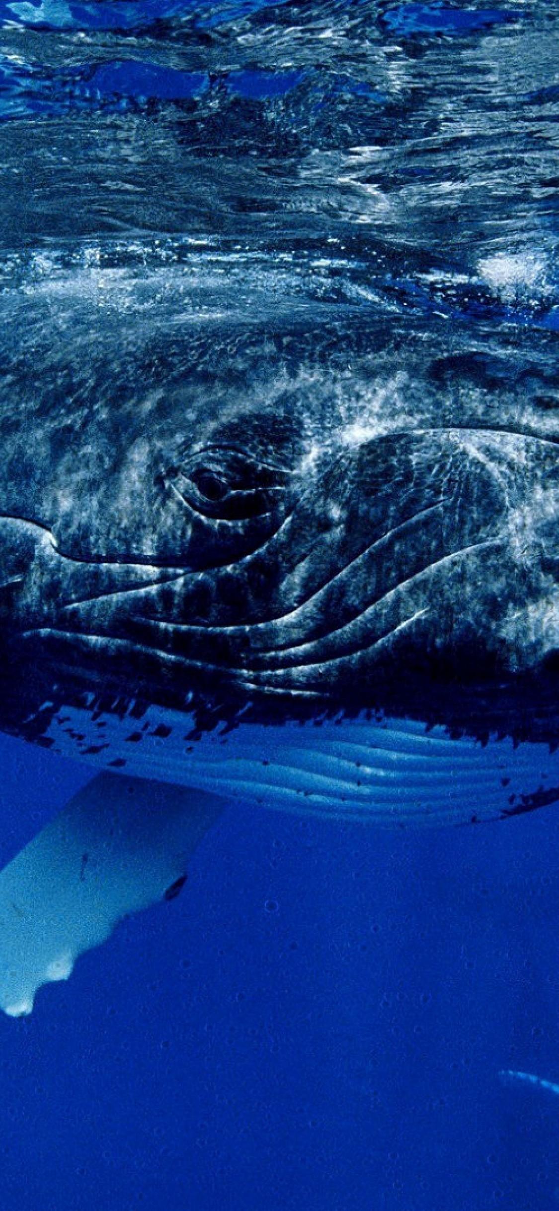 iPhone wallpaper sea whale Fonds d'écran iPhone du 08/08/2018