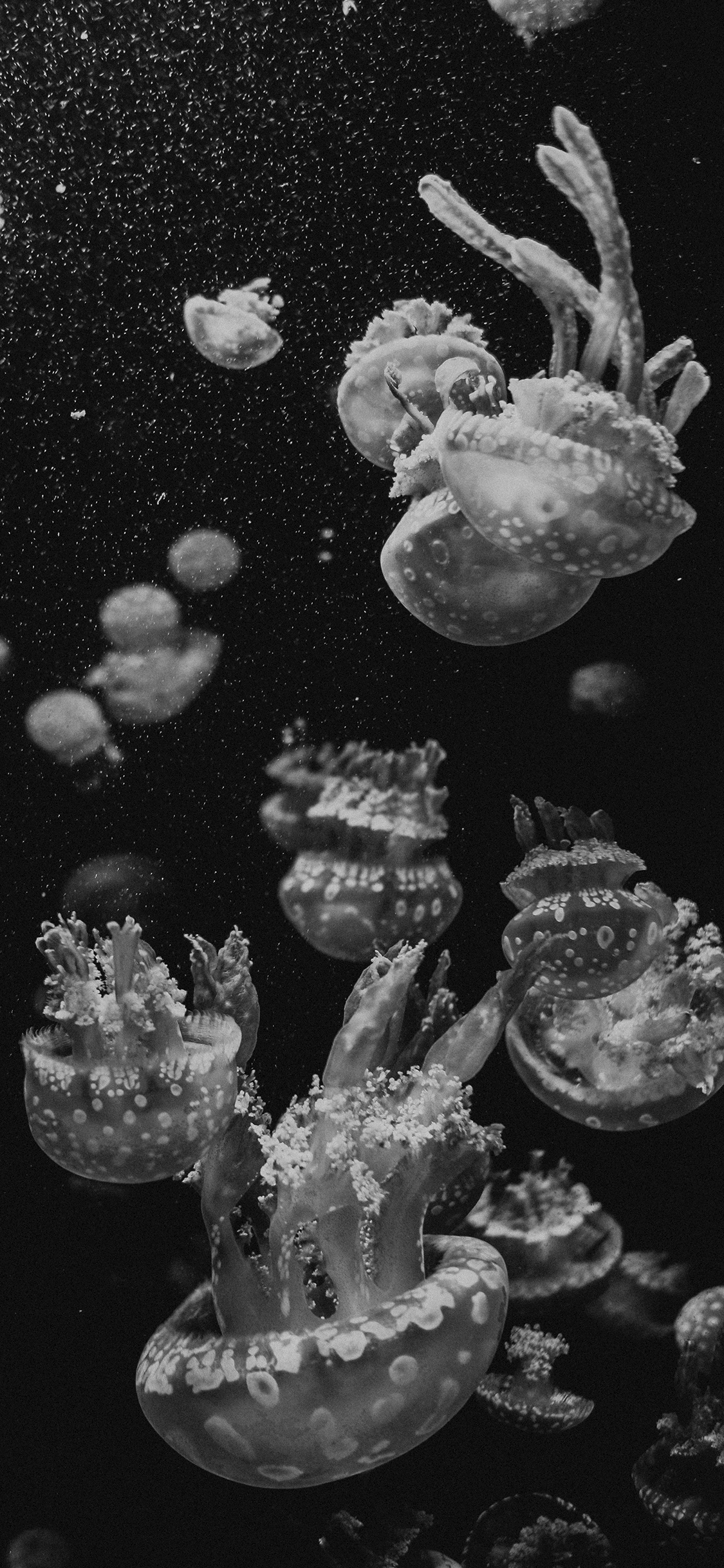 iPhone wallpaper black white jellyfish Fonds d'écran iPhone du 26/09/2018