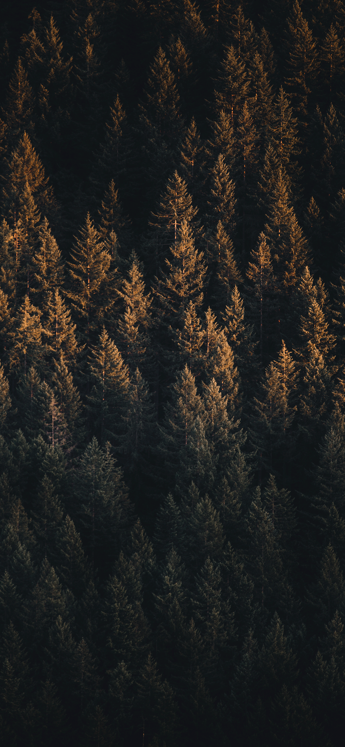Forest Wallpaper For Iphone X 8 7 6 Free Download On 3wallpapers