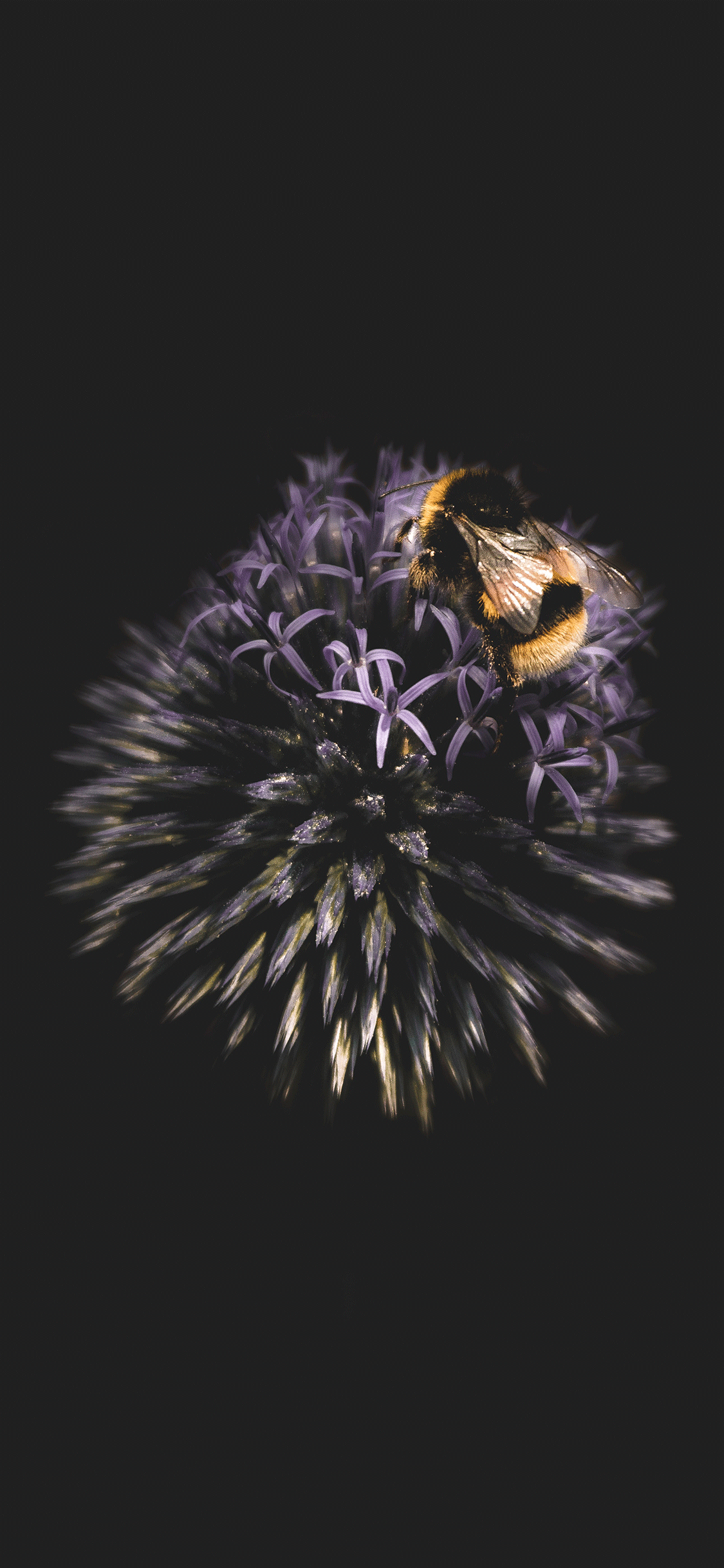 iPhone wallpaper dark bee Black Background