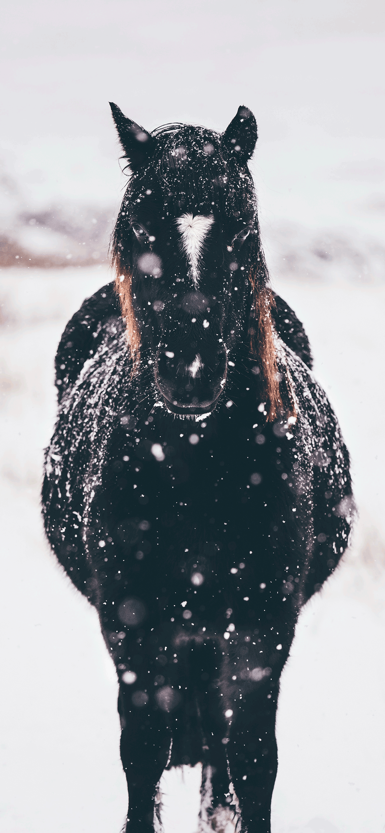 iPhone wallpaper winter black horse Fonds d'écran iPhone du 30/10/2018