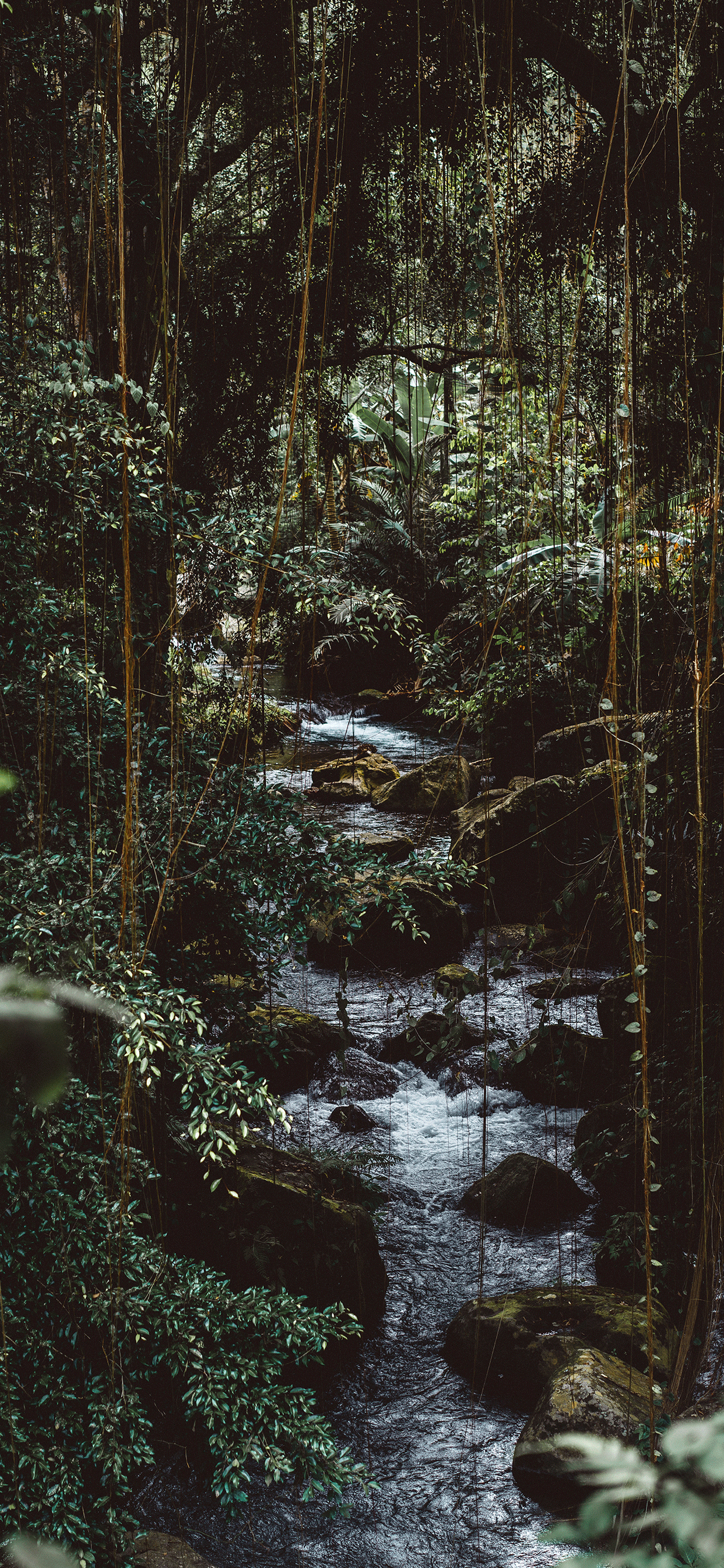 iPhone wallpaper jungle river Fonds d'écran iPhone du 06/11/2018