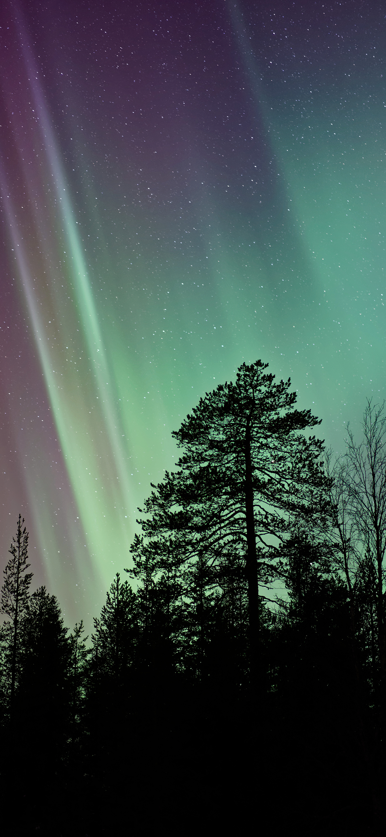 iPhone wallpaper aurora borealis trees Northern Lights