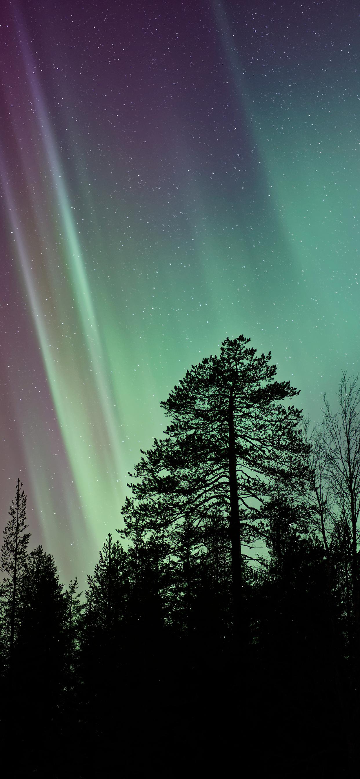 iPhone wallpaper aurora borealis trees Fonds d'écran iPhone du 11/12/2018