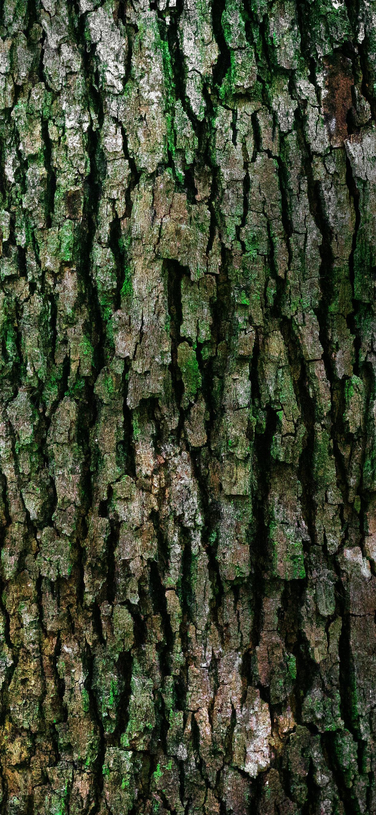 iPhone wallpaper cortex texture green Cortex