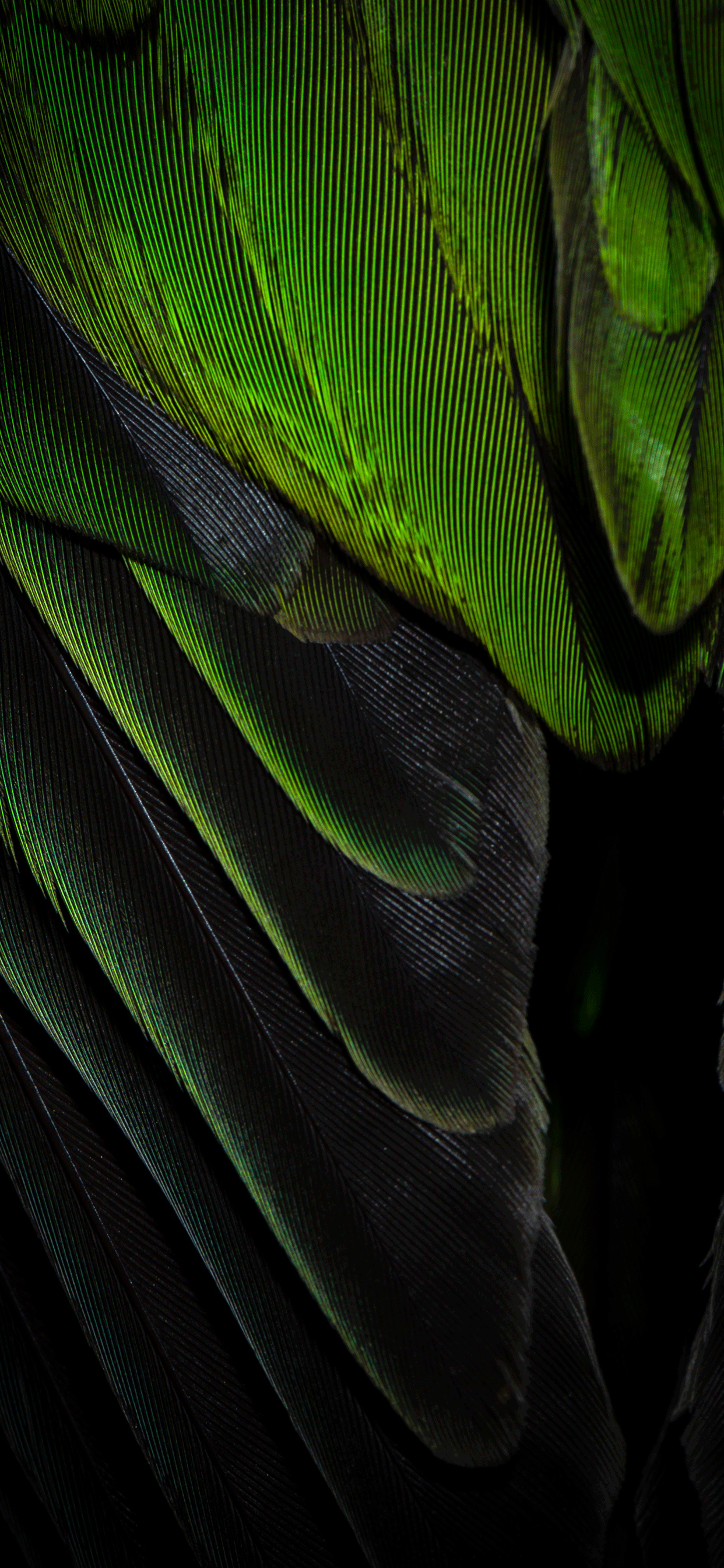 iPhone wallpaper feathers green black Fonds d'écran iPhone du 19/02/2019