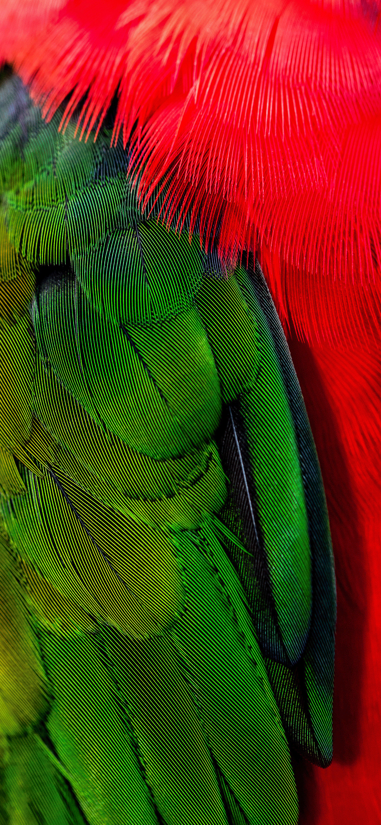 iPhone wallpaper feathers green red Feathers
