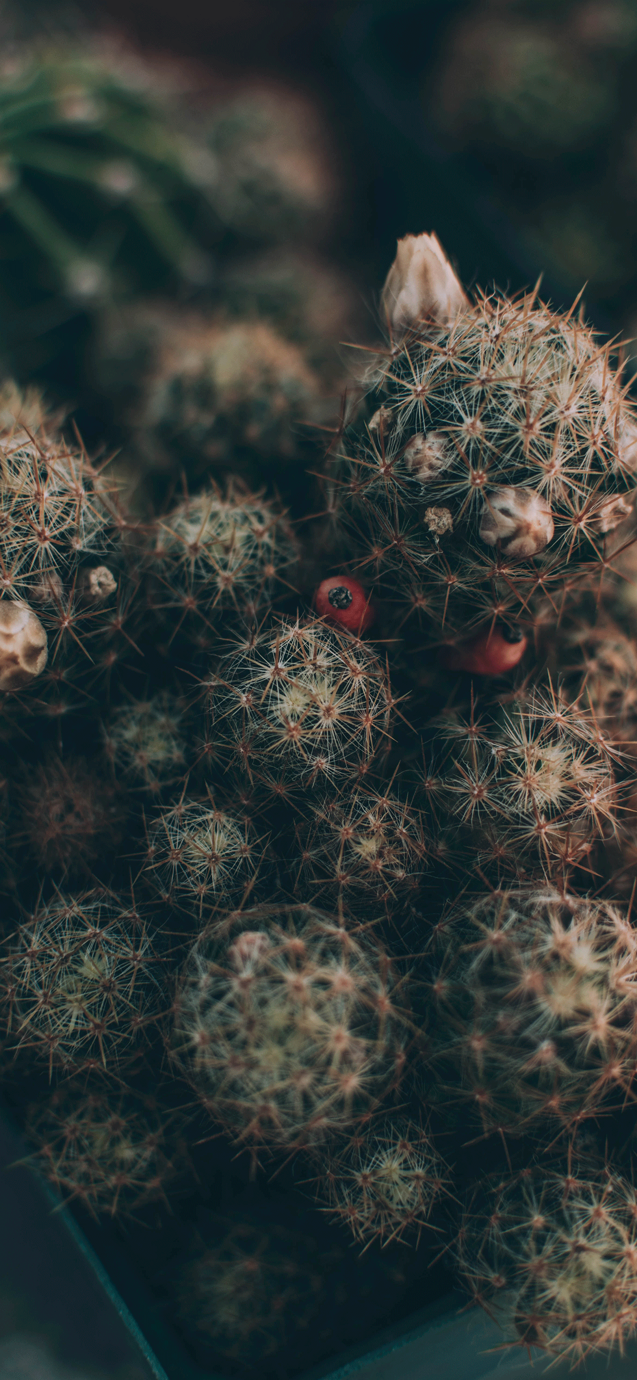 iPhone wallpapers cactus plant Fonds d'écran iPhone du 28/03/2019