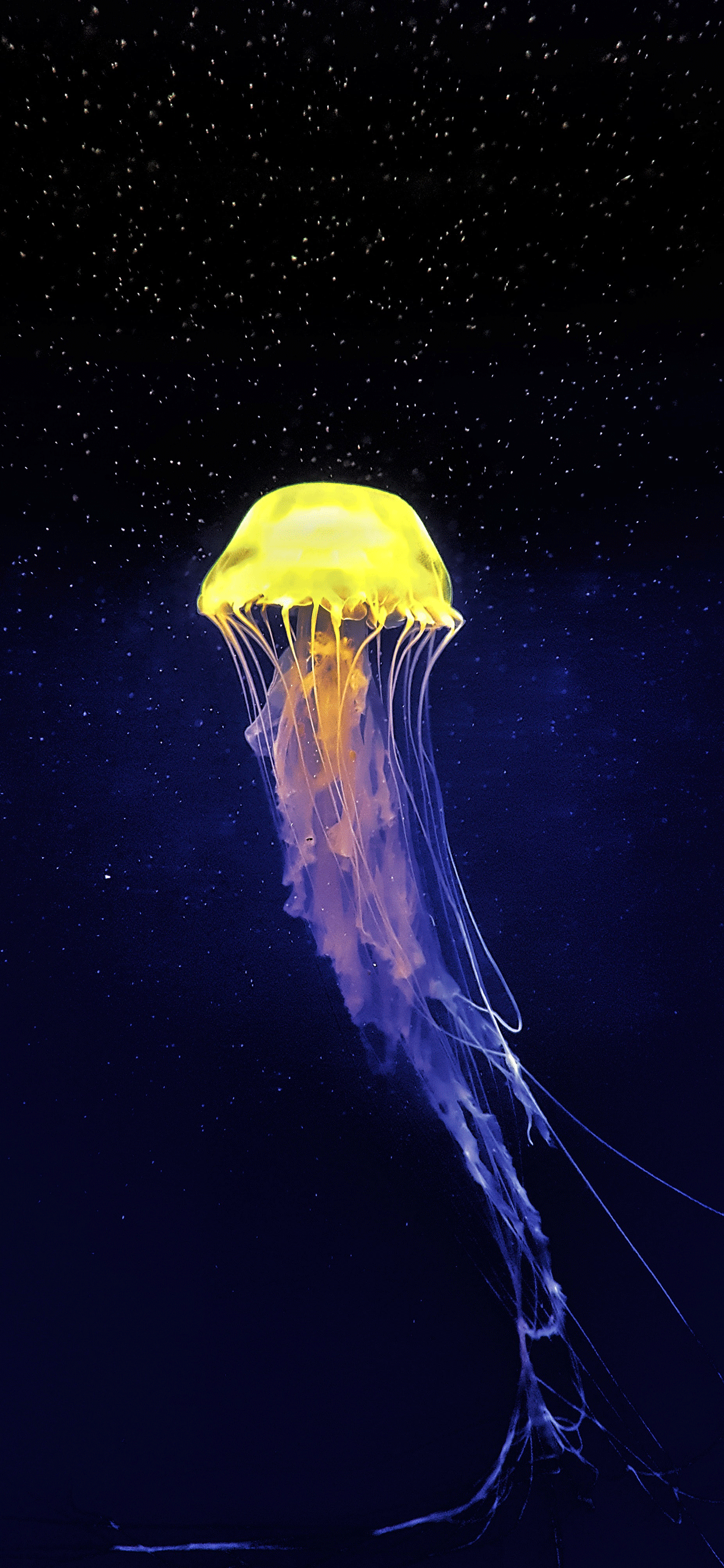 iPhone wallpapers jellyfish aquarium singapore Fonds d'écran iPhone du 26/03/2019
