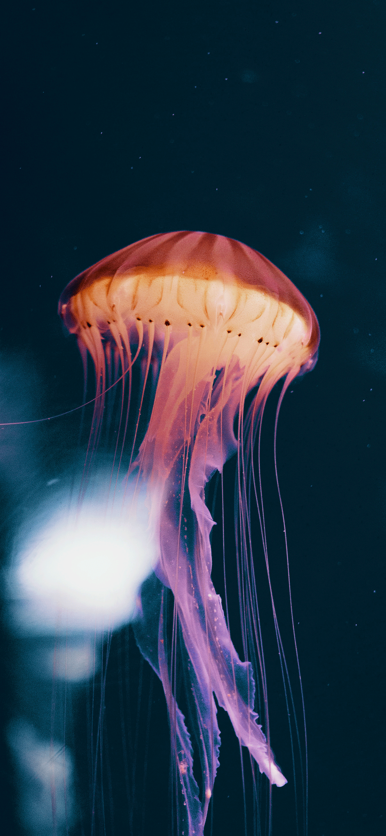 iPhone wallpapers jellyfish neon Fonds d'écran iPhone du 26/03/2019
