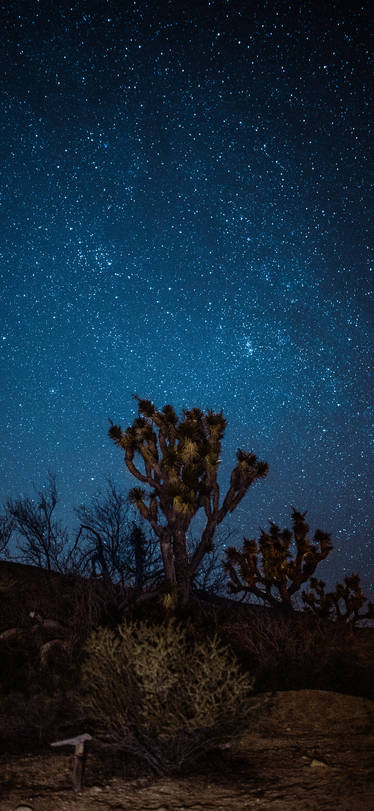 iPhone wallpaper stars joshua tree Fonds d'écran iPhone du 29/04/2019