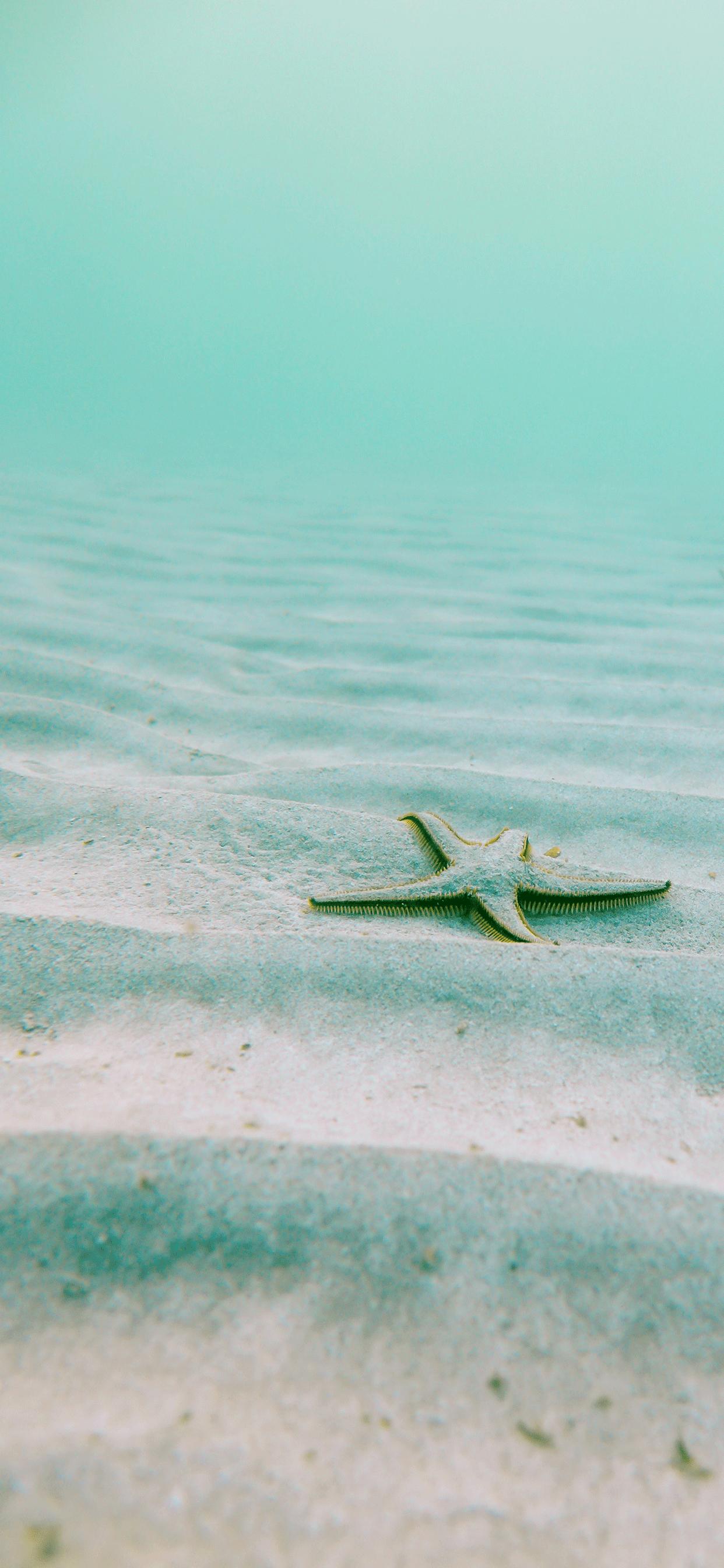 iPhone wallpapers starfish underwater Starfish