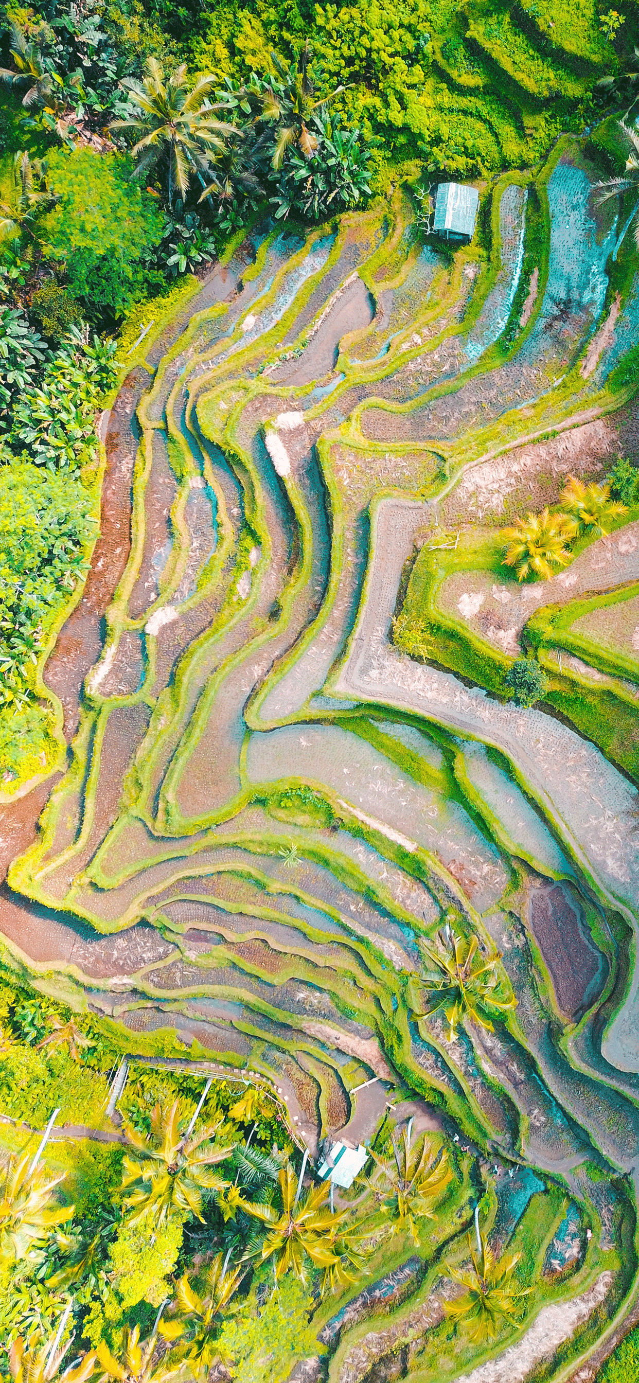 iPhone wallpapers ubud indonesia rice terrace Fonds d'écran iPhone du 09/05/2019