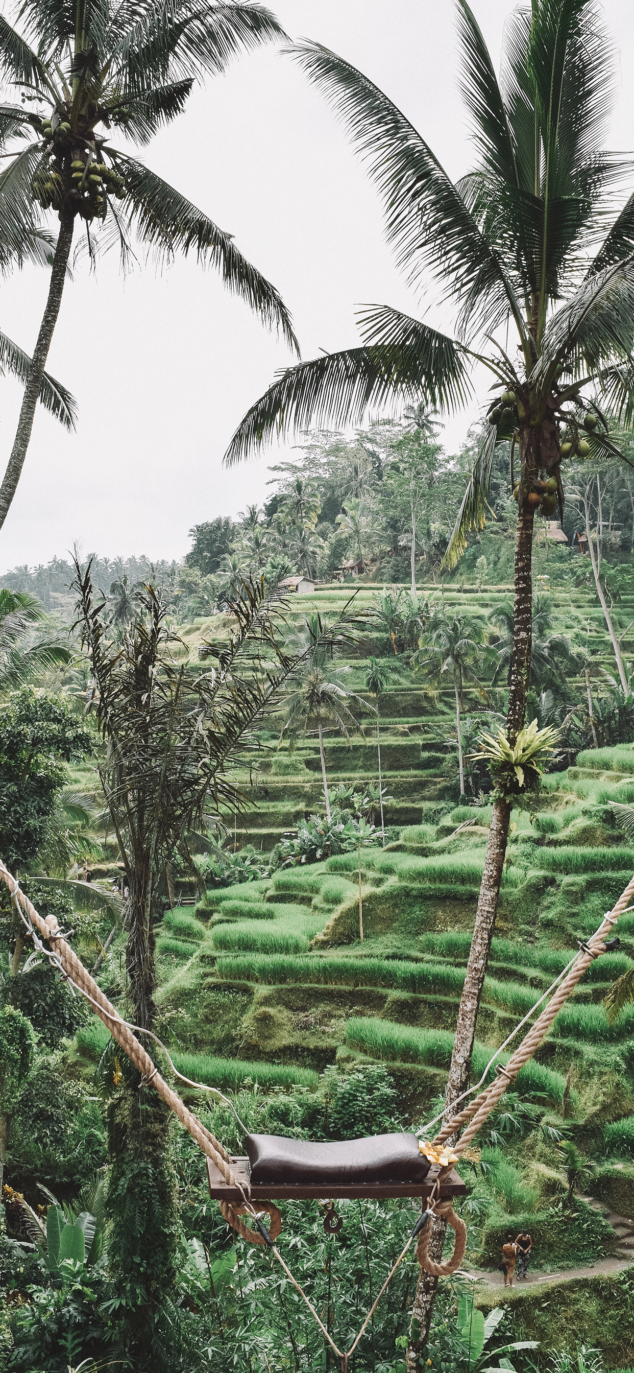 iPhone wallpapers ubud indonesia swing Fonds d'écran iPhone du 09/05/2019
