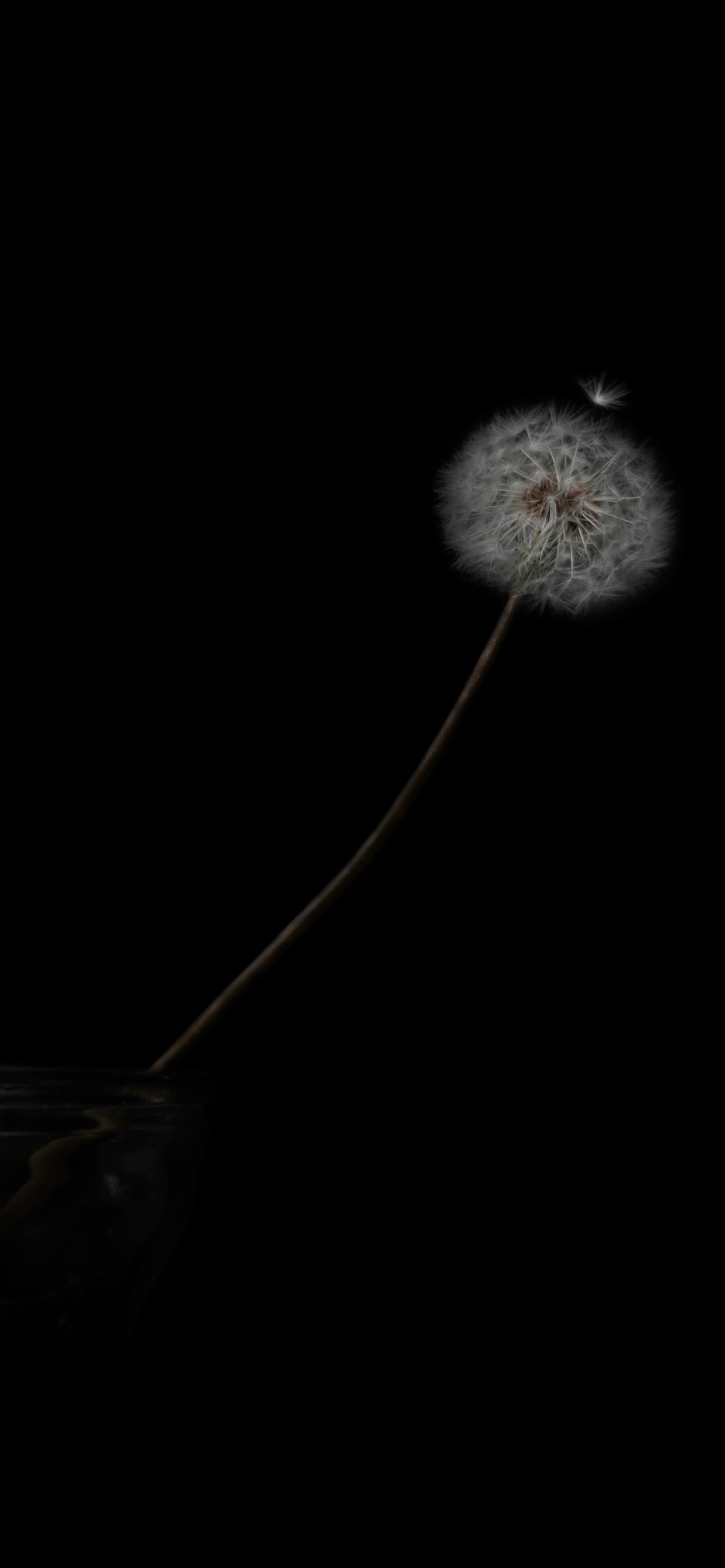 iPhone wallpapers black dandelion Fonds d'écran iPhone du 27/06/2019
