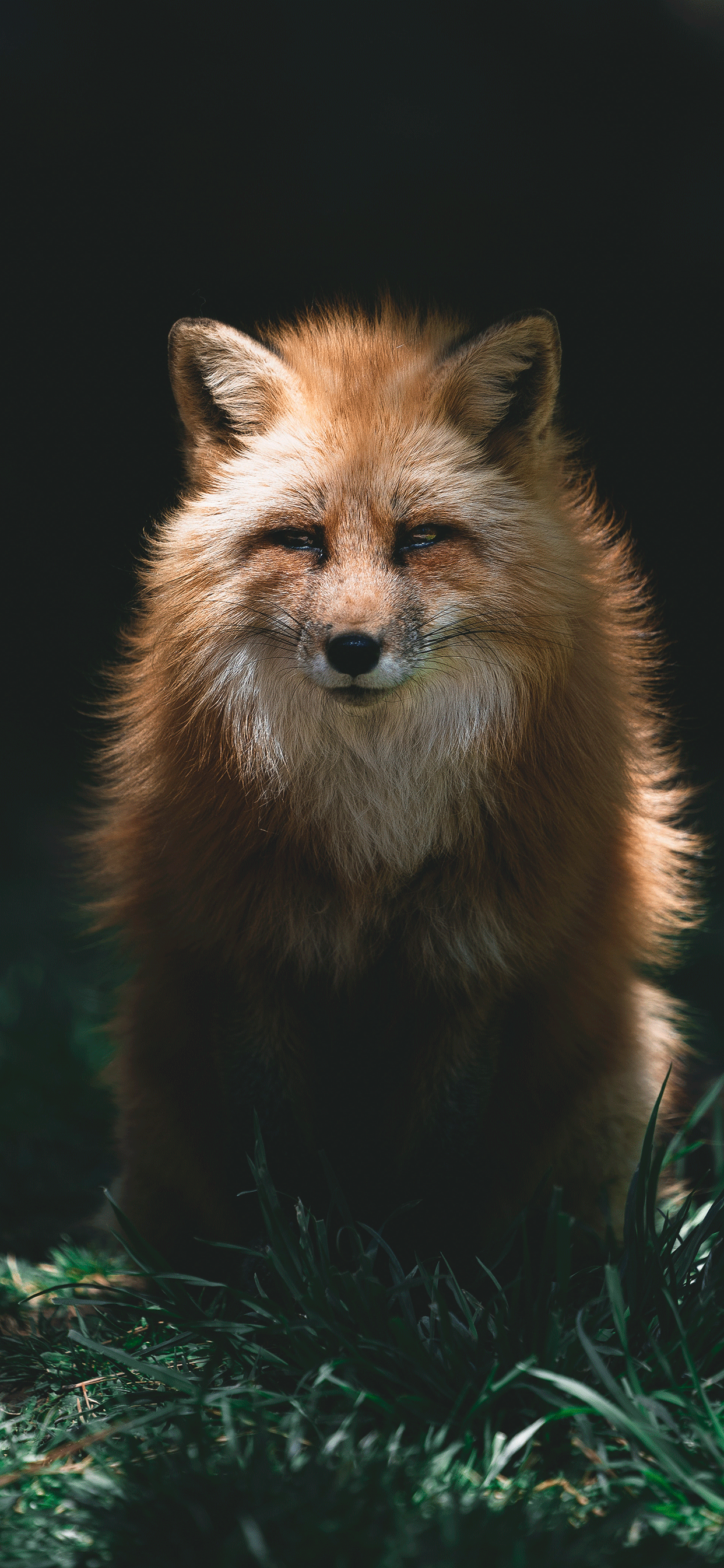 iPhone wallpapers fox eyes closed Fonds d'écran iPhone du 28/06/2019