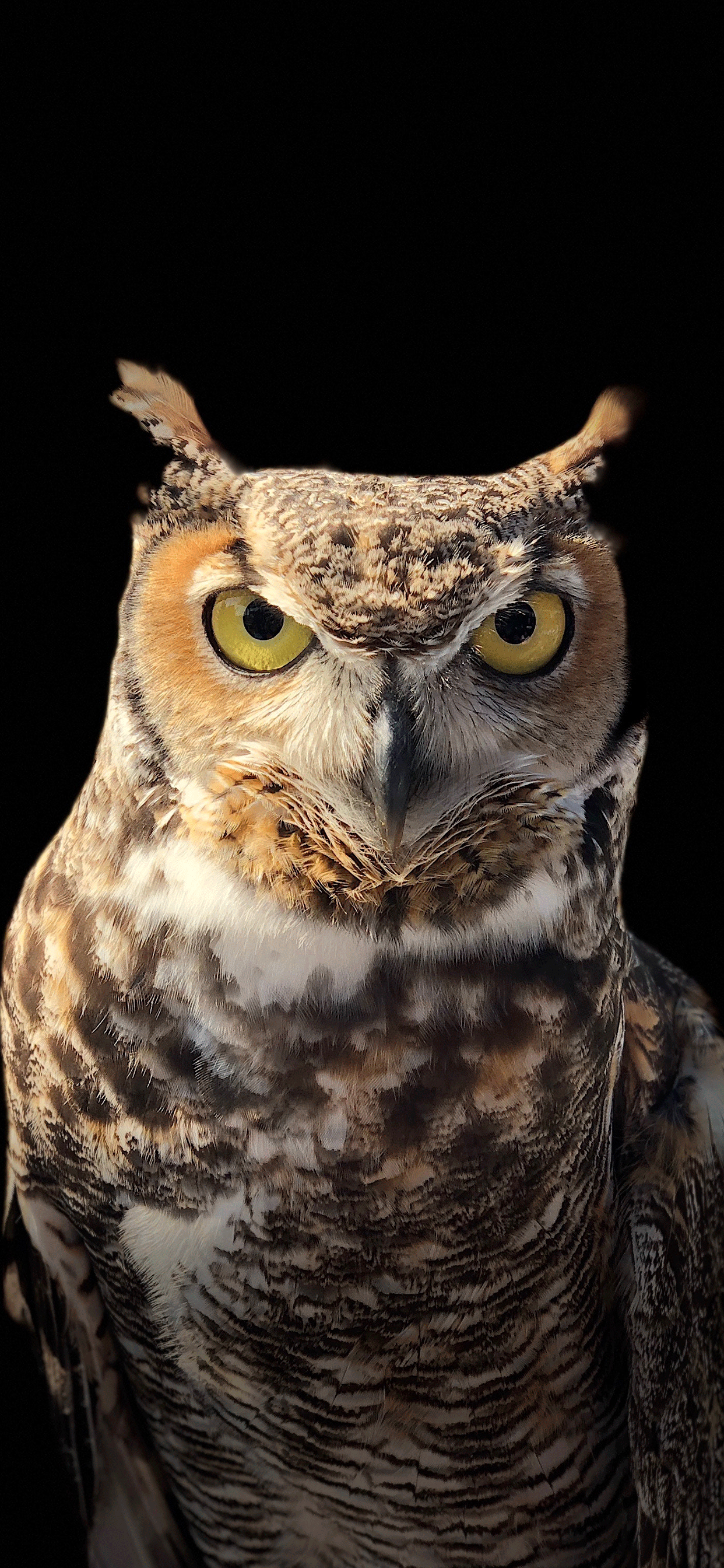 iPhone wallpapers owl eyes Fonds d'écran iPhone du 07/06/2019