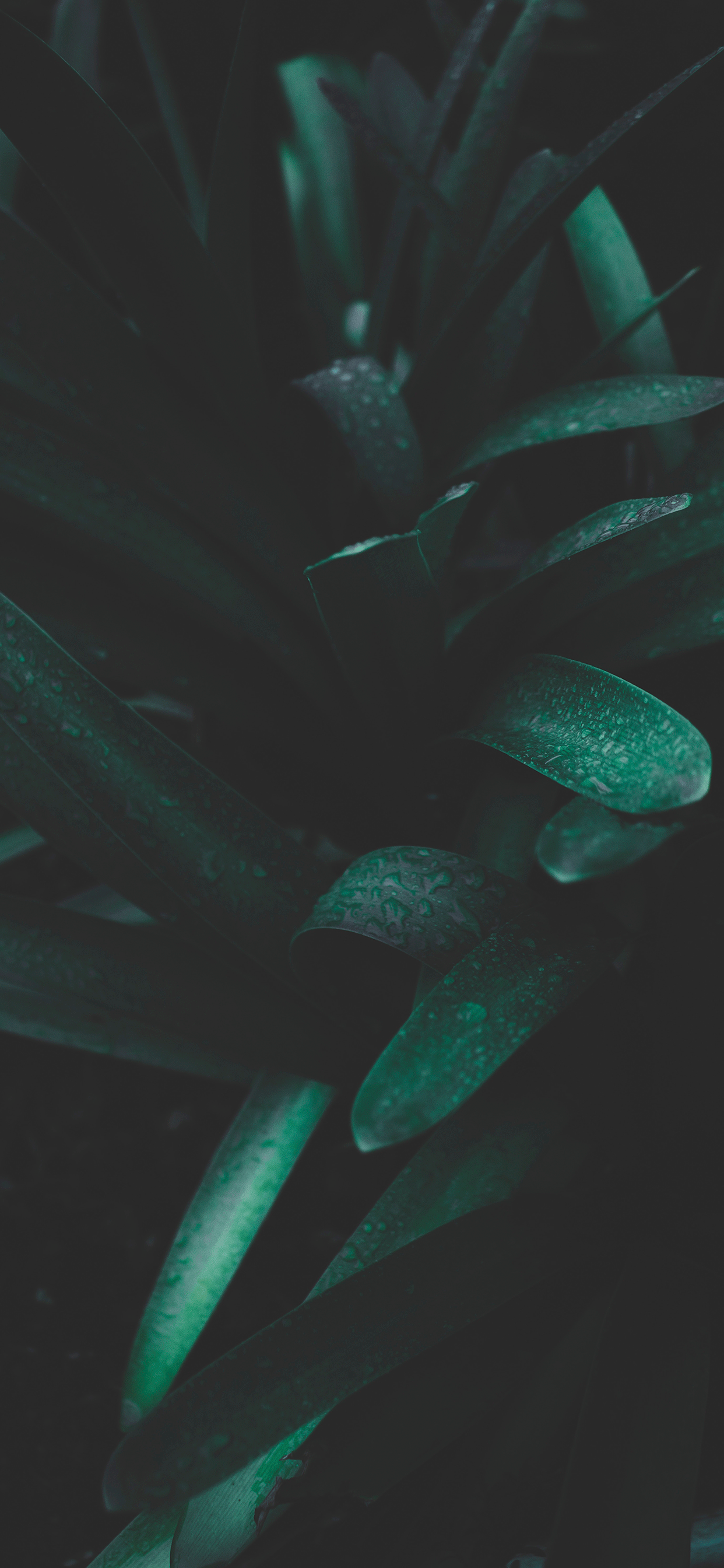 iPhone wallpapers plants darker Fonds d'écran iPhone du 13/06/2019