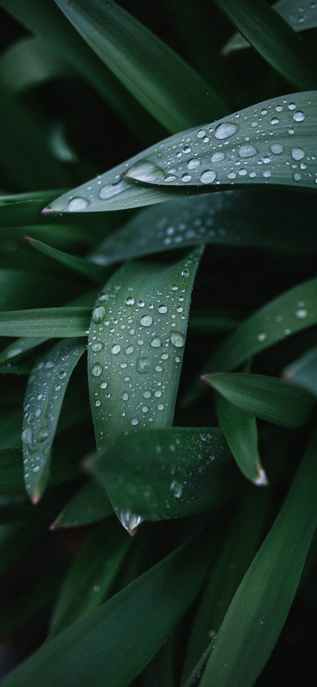 iPhone wallpapers plants wet leaves Fonds d'écran iPhone du 13/06/2019