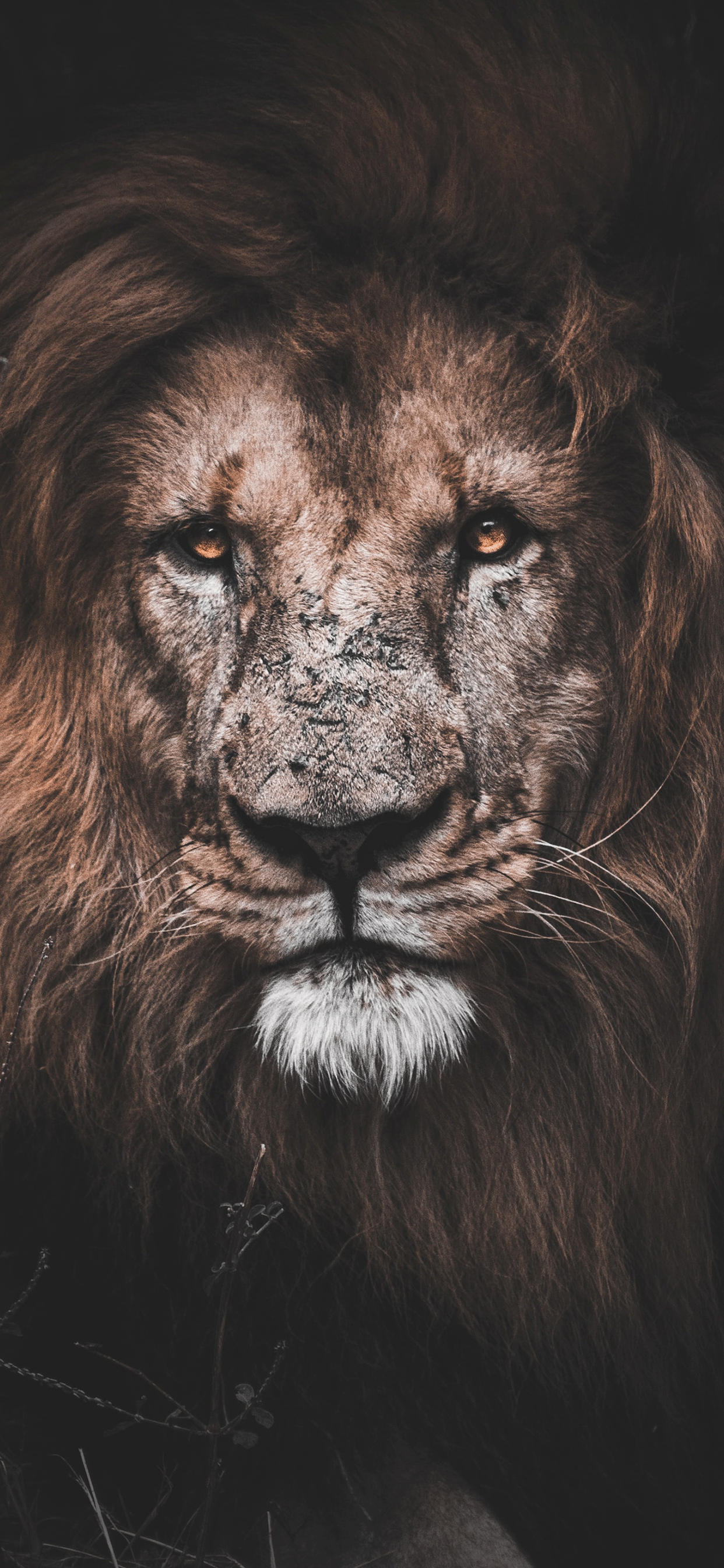 iPhone wallpaper lion mauritius Fonds d'écran iPhone du 09/07/2019