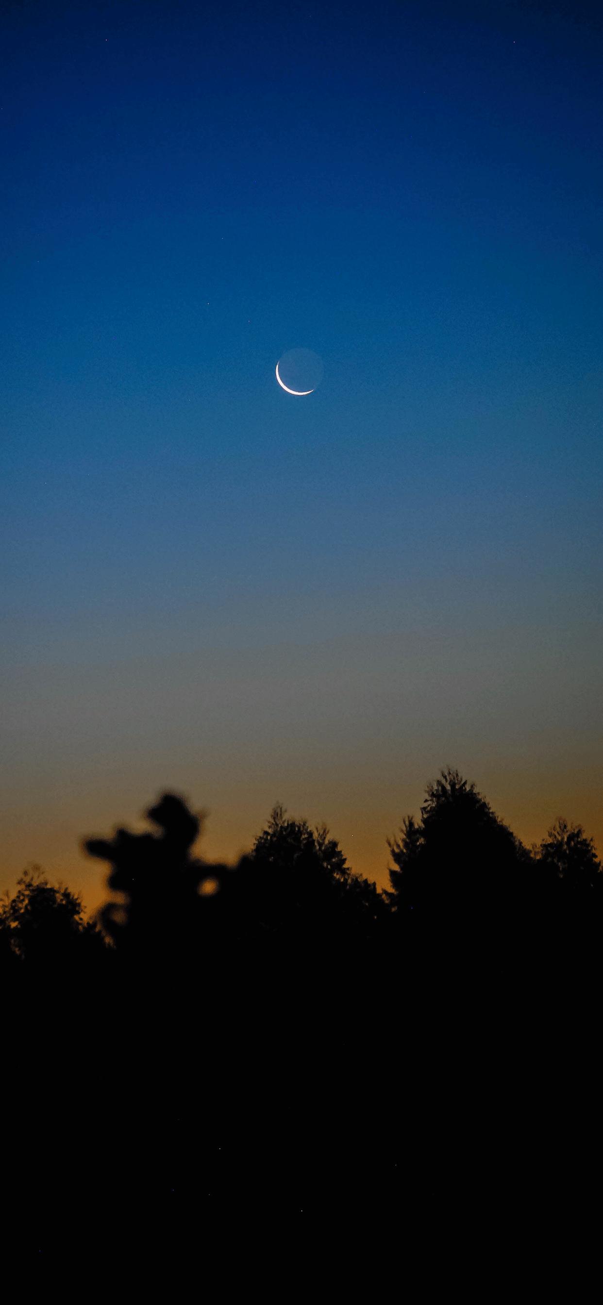 iPhone wallpapers moon trees Moon