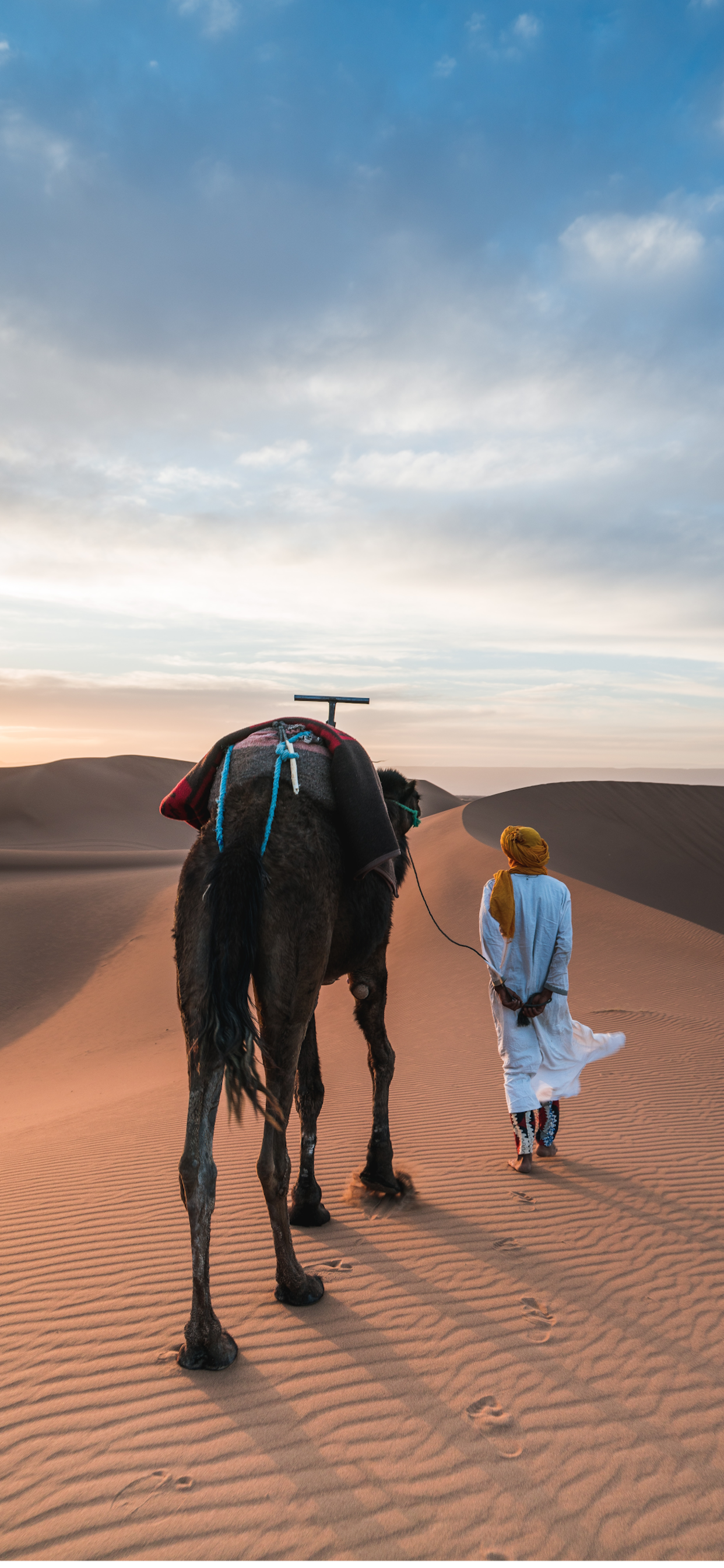iPhone wallpaper morocco camel Fonds d'écran iPhone du 09/08/2019