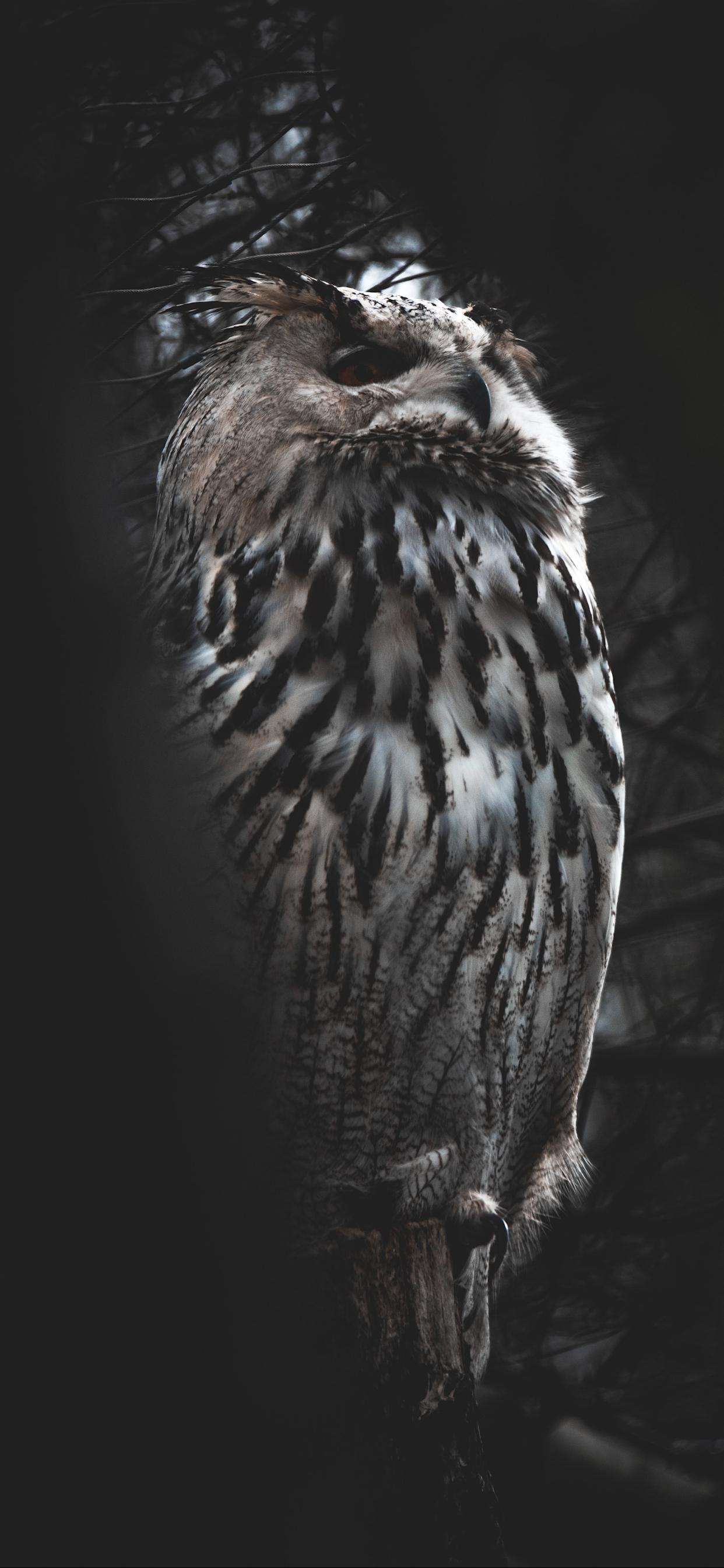 iPhone wallpapers owl hellabrunn zoo Fonds d'écran iPhone du 22/08/2019