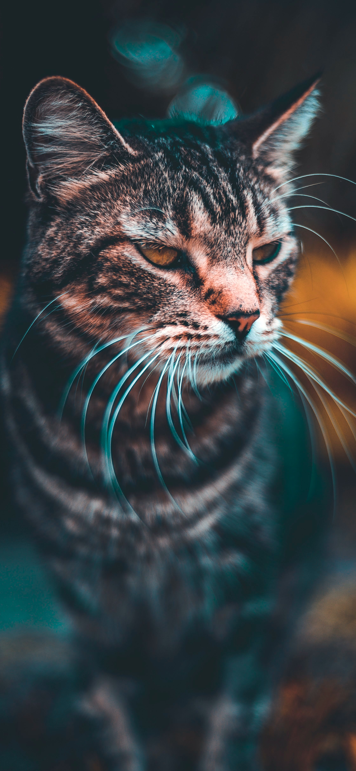 iPhone wallpapers cat wild naples Fonds d'écran iPhone du 04/09/2019