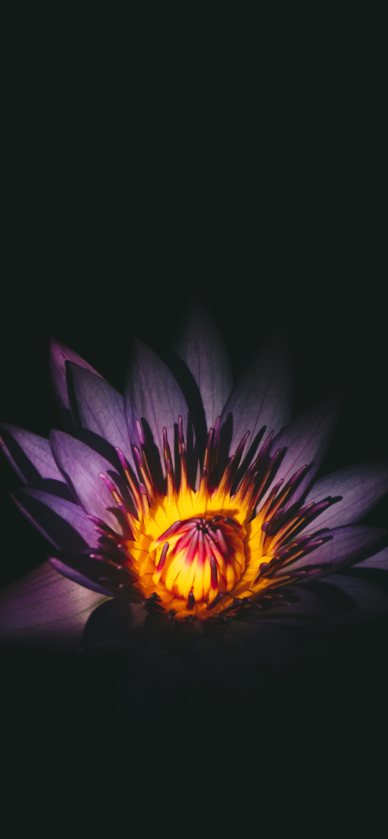 iPhone wallpapers flowers dark purple Flowers