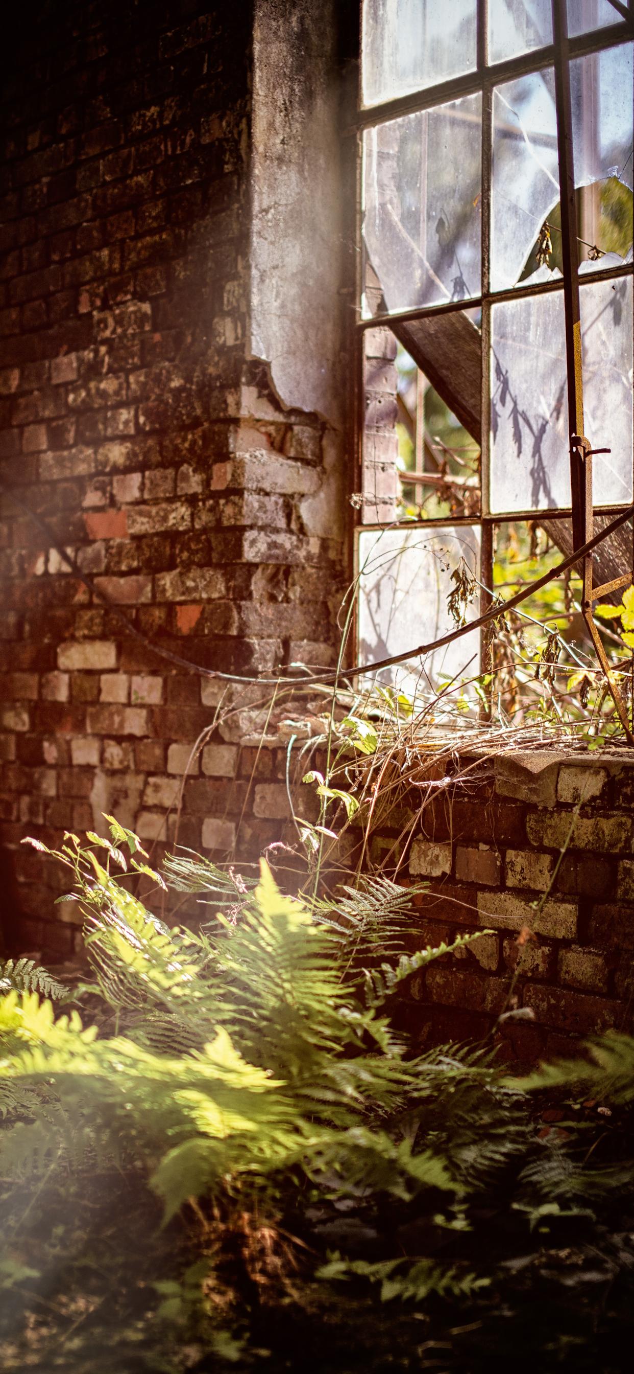 iPhone wallpapers abandoned room plants Fonds d'écran iPhone du 29/10/2019