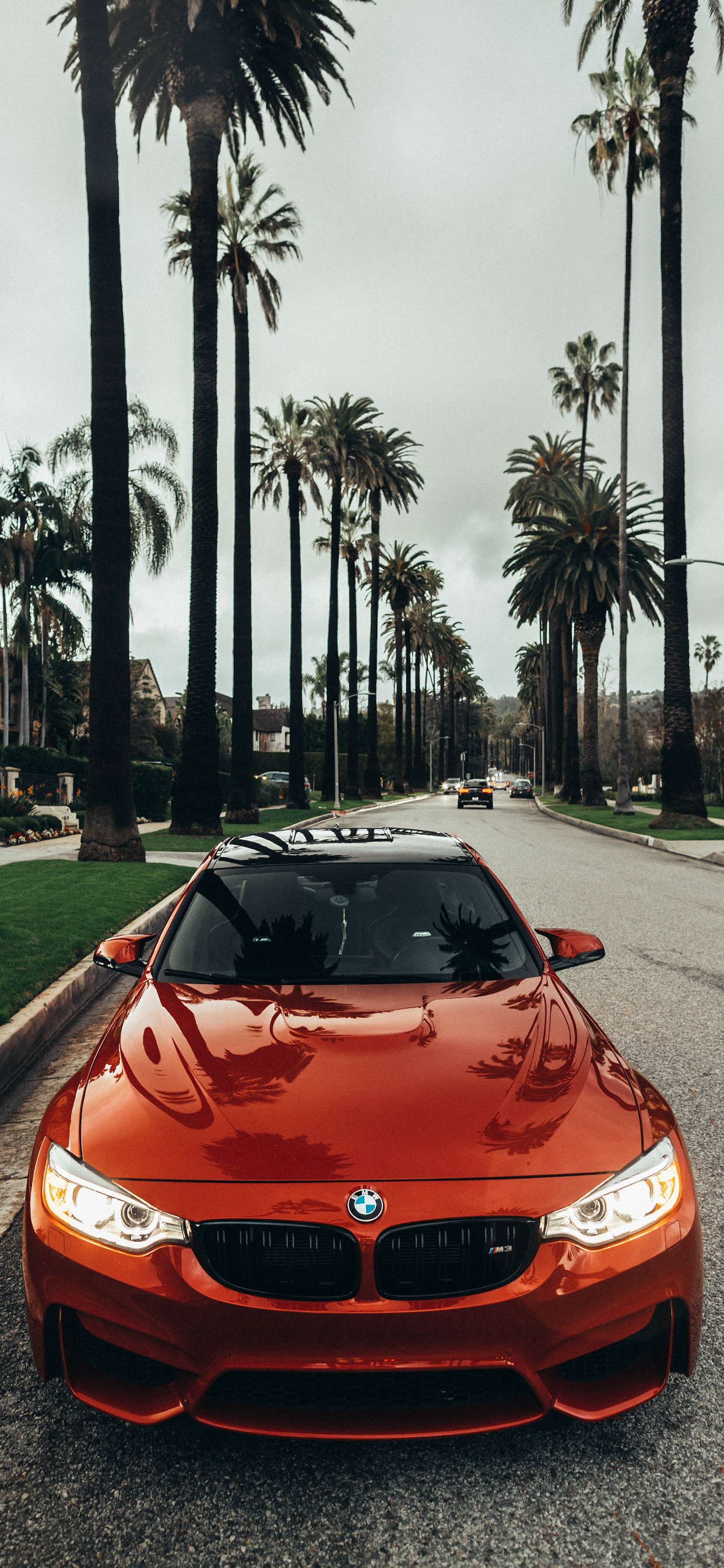 iPhone wallpapers cars bmw palm tree Cars