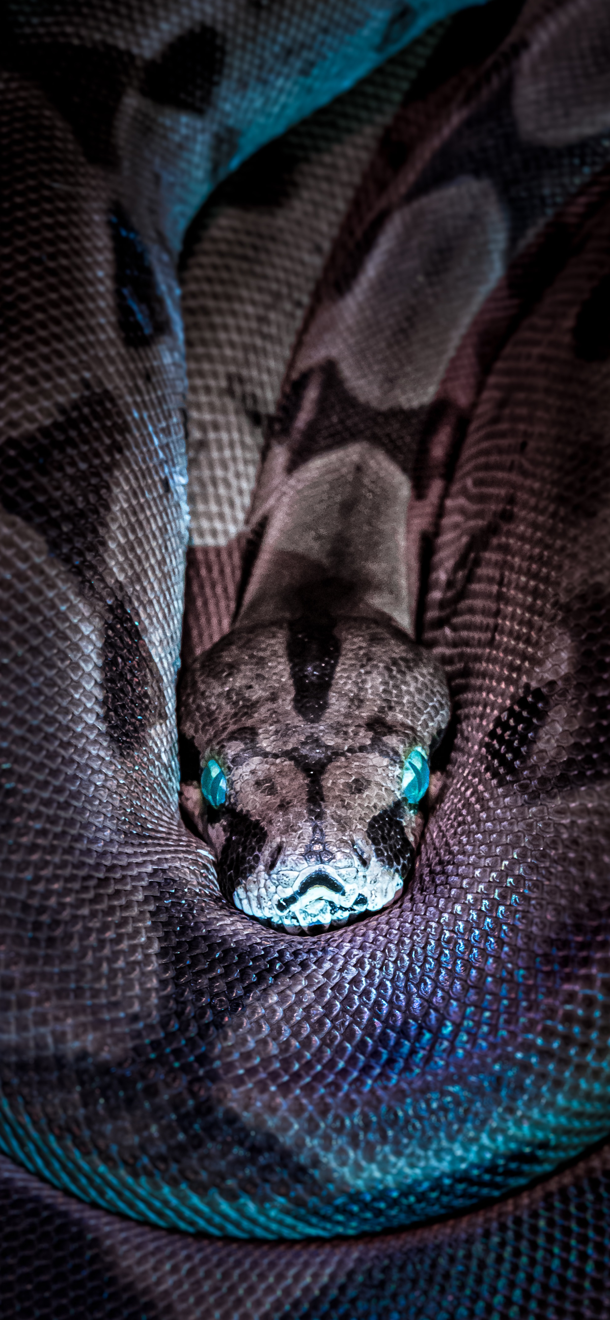 iPhone wallpapers snake blue eyes Snakes