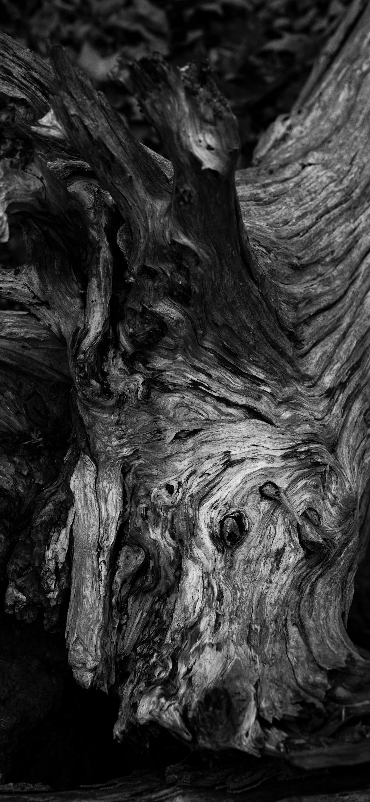 iPhone wallpapers textures tree rattlesnake Textures