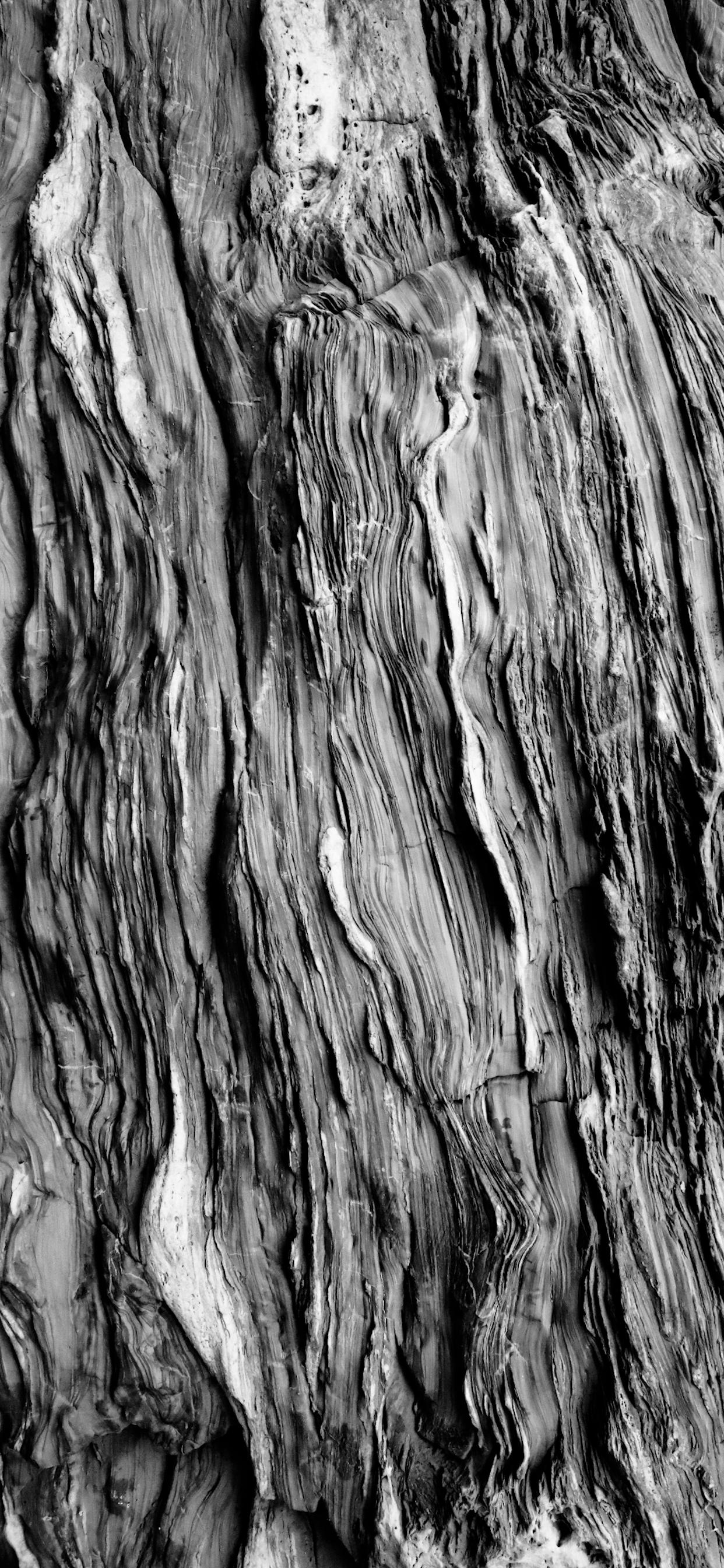 iPhone wallpapers textures tree trunk Textures