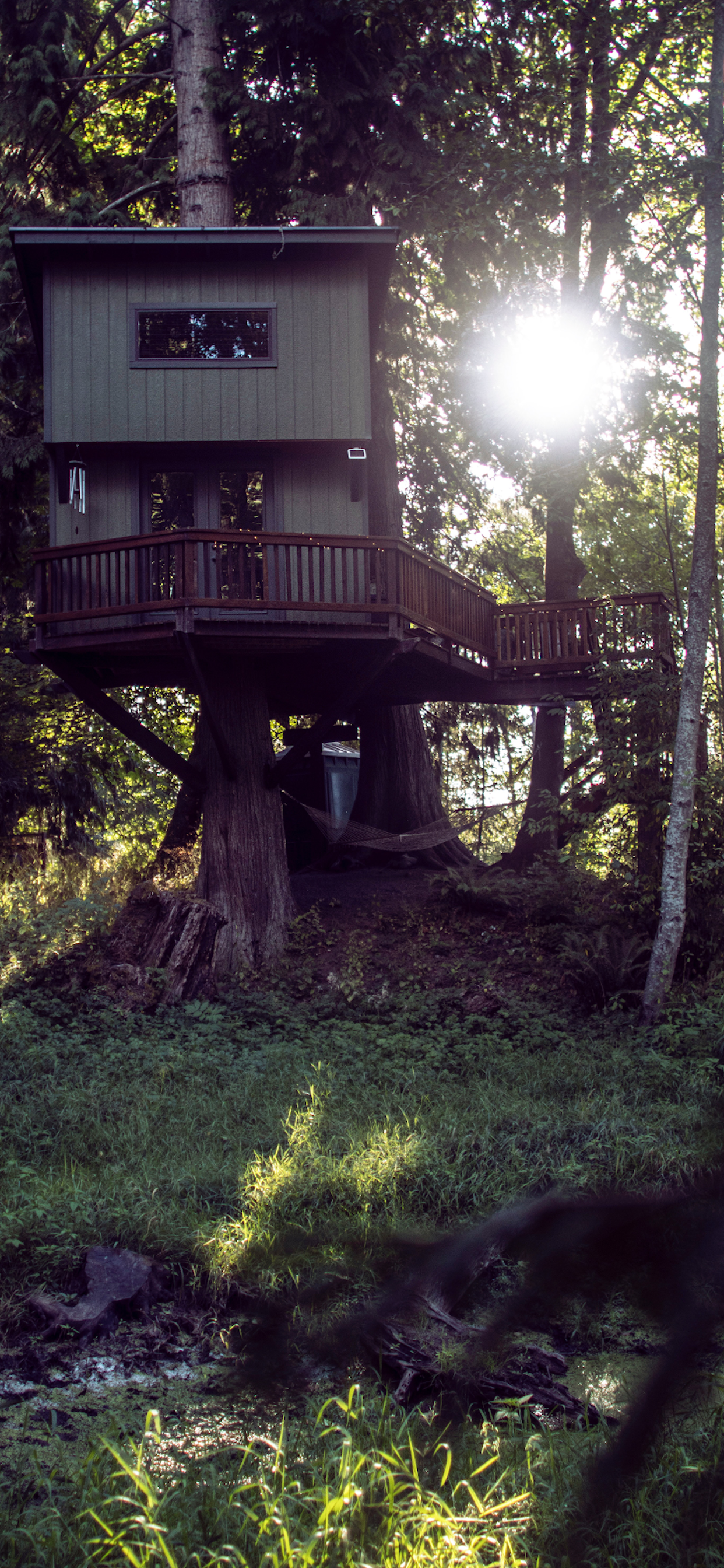 iPhone wallpapers treehouse olympia usa Fonds d'écran iPhone du 04/12/2019