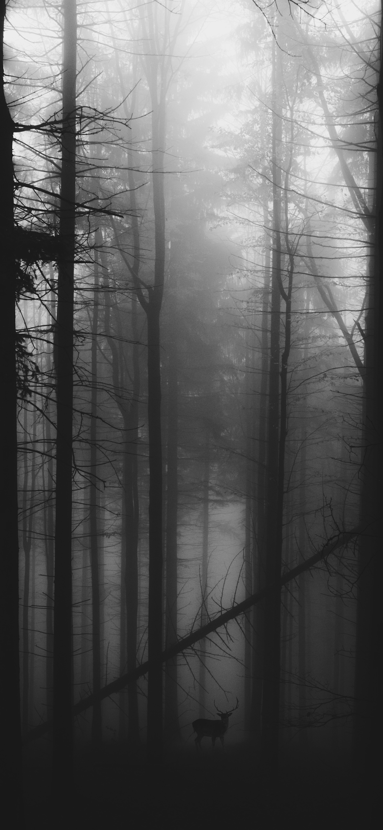 iPhone wallpapers black white forest alaska Fonds d'écran iPhone du 10/01/2020
