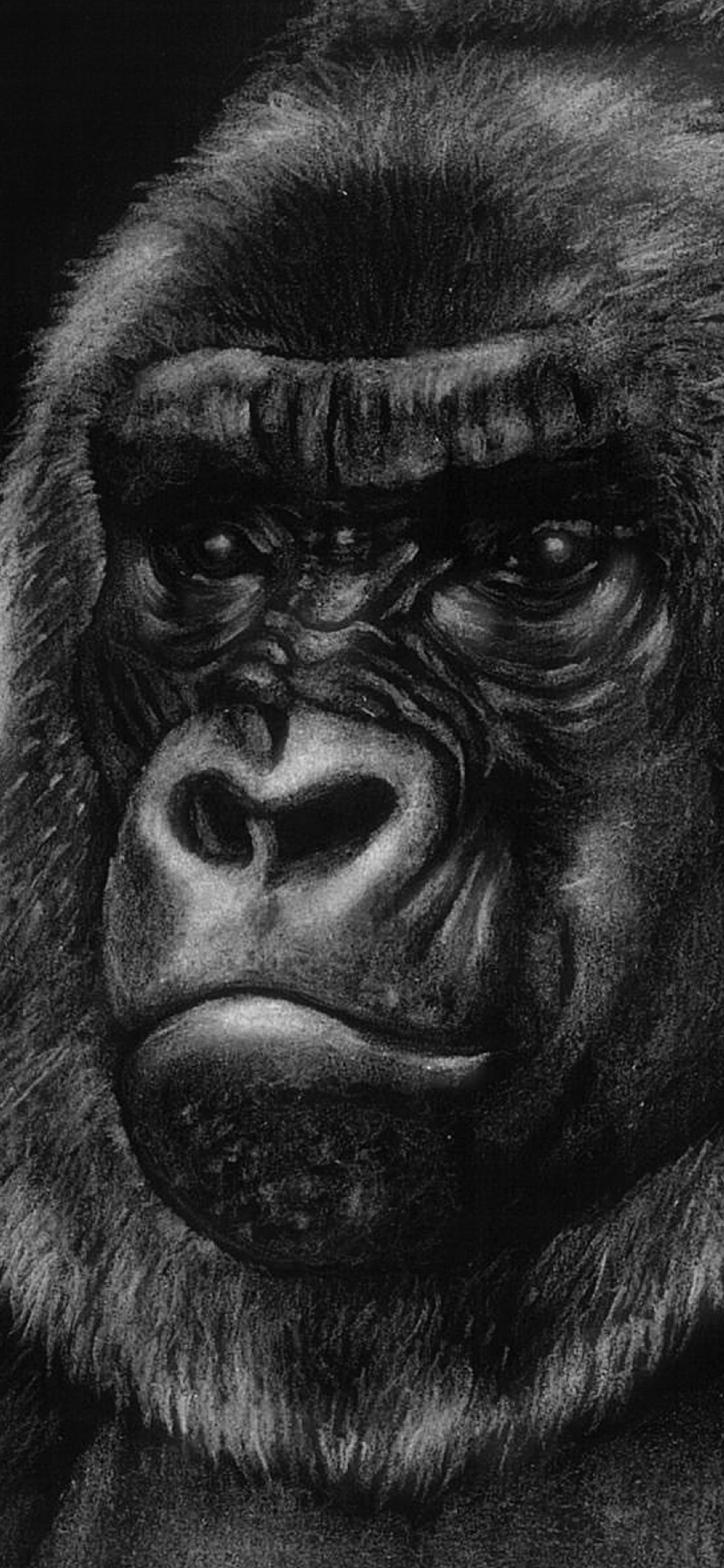 iPhone wallpapers illustration gorilla Fonds d'écran iPhone du 03/02/2020